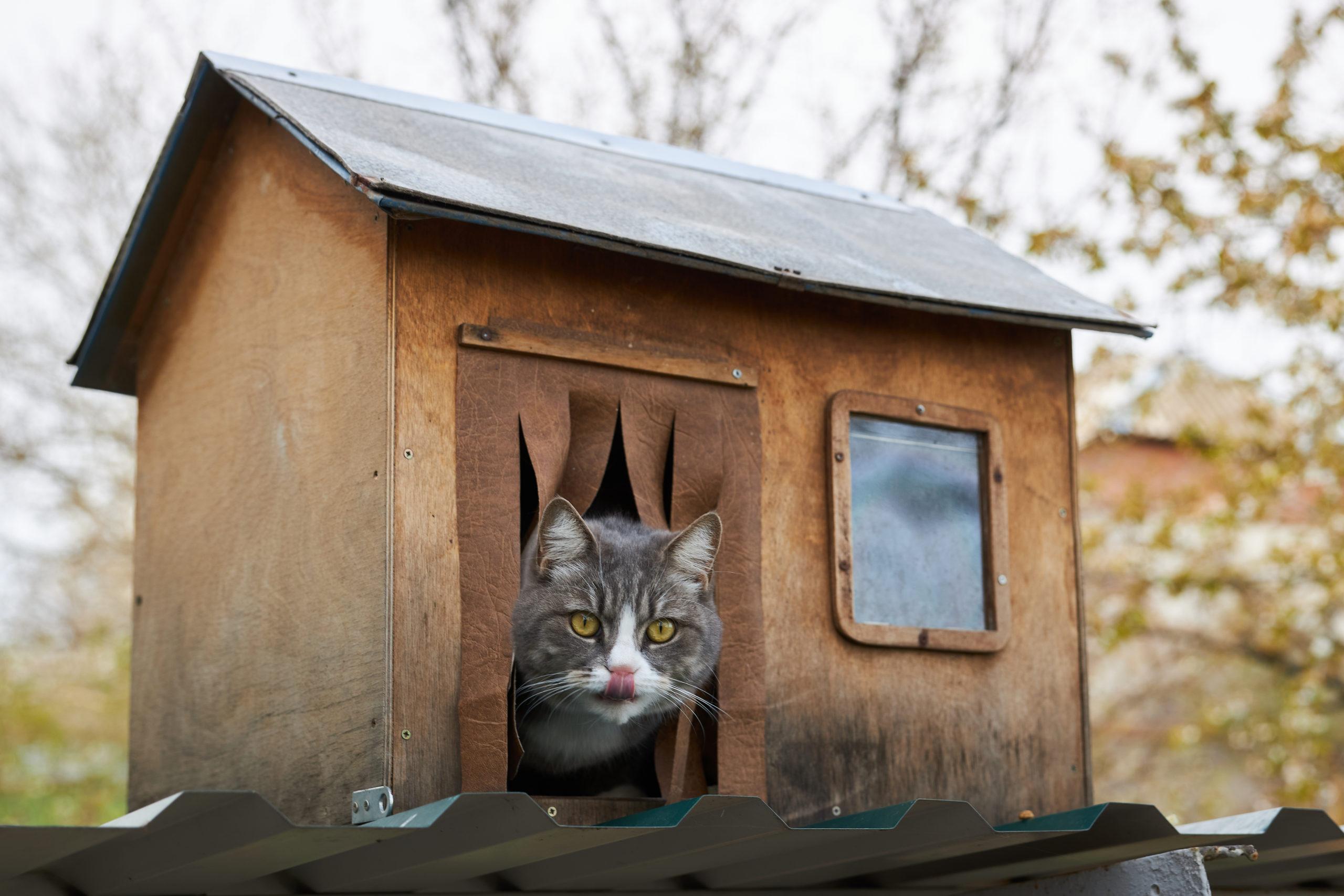 猫の病気を疑う2つの注意点