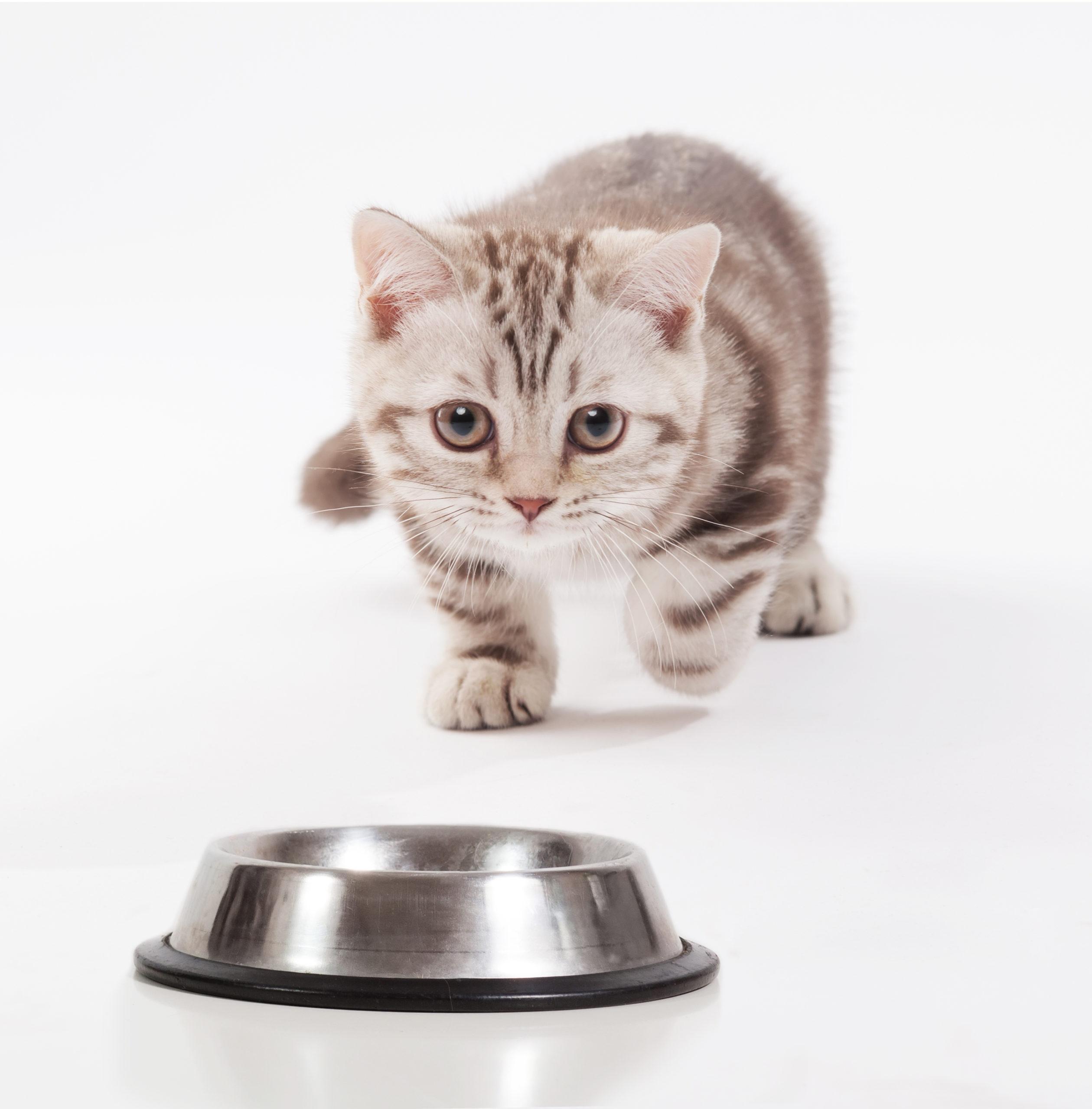 猫がご飯を食べないのはなぜ?【猫がご飯を食べない5つの理由】