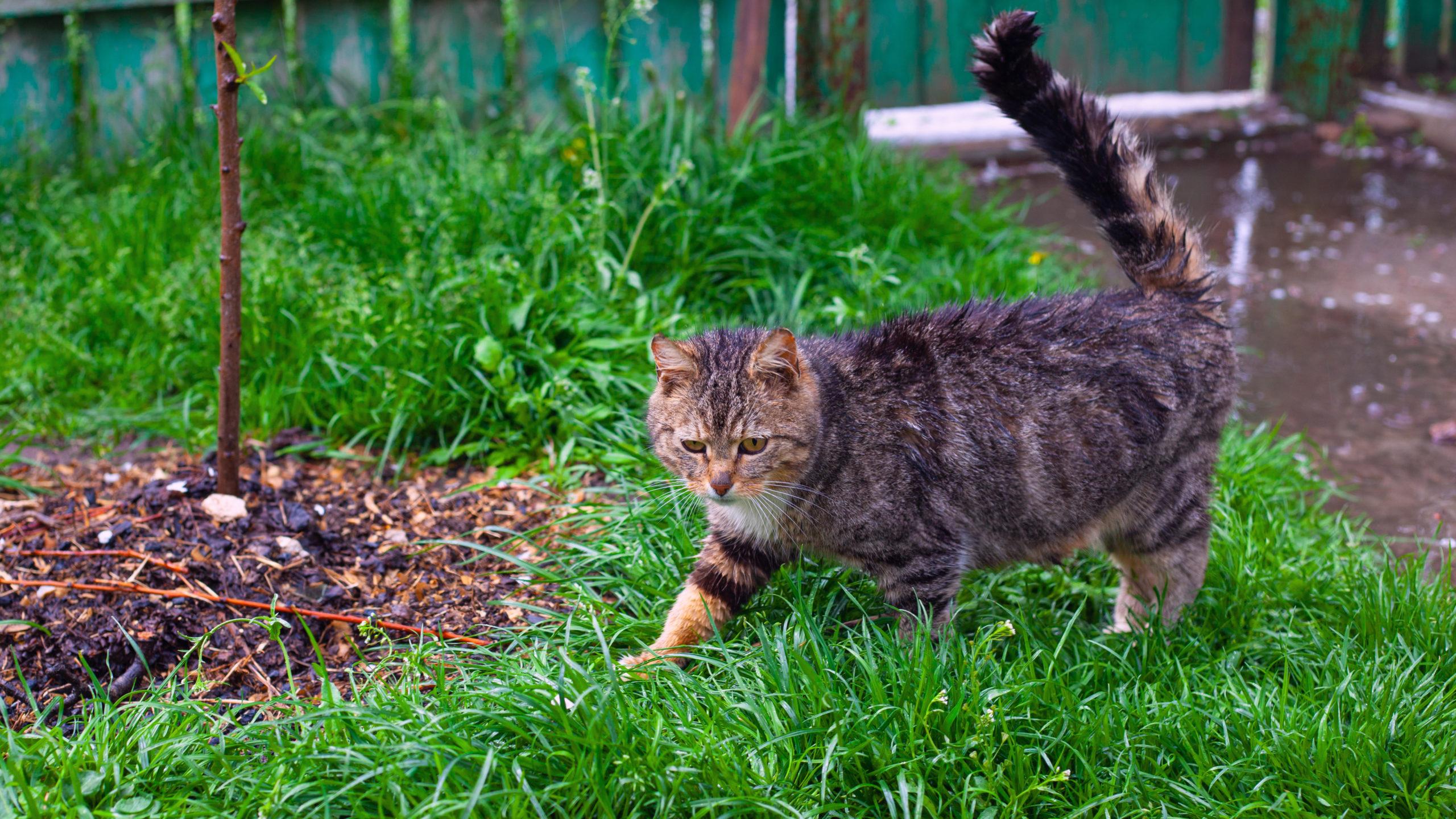 猫のしっぽがピーンとなるのはなぜ?