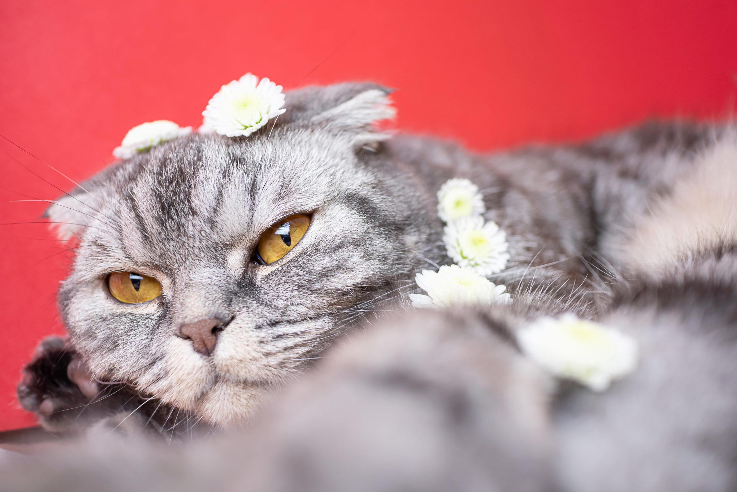 【2020年】猫の人気の動画【再生回数100万回以上を厳選】