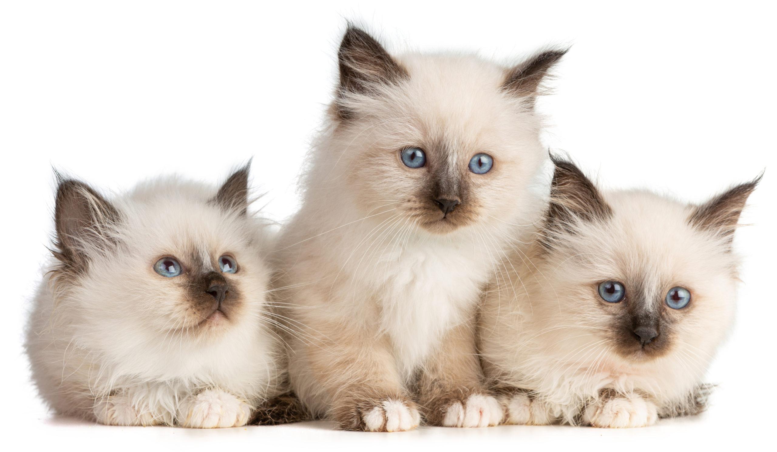 【猫好き必見!】子猫の動画【子猫が可愛すぎるので閲覧注意!】