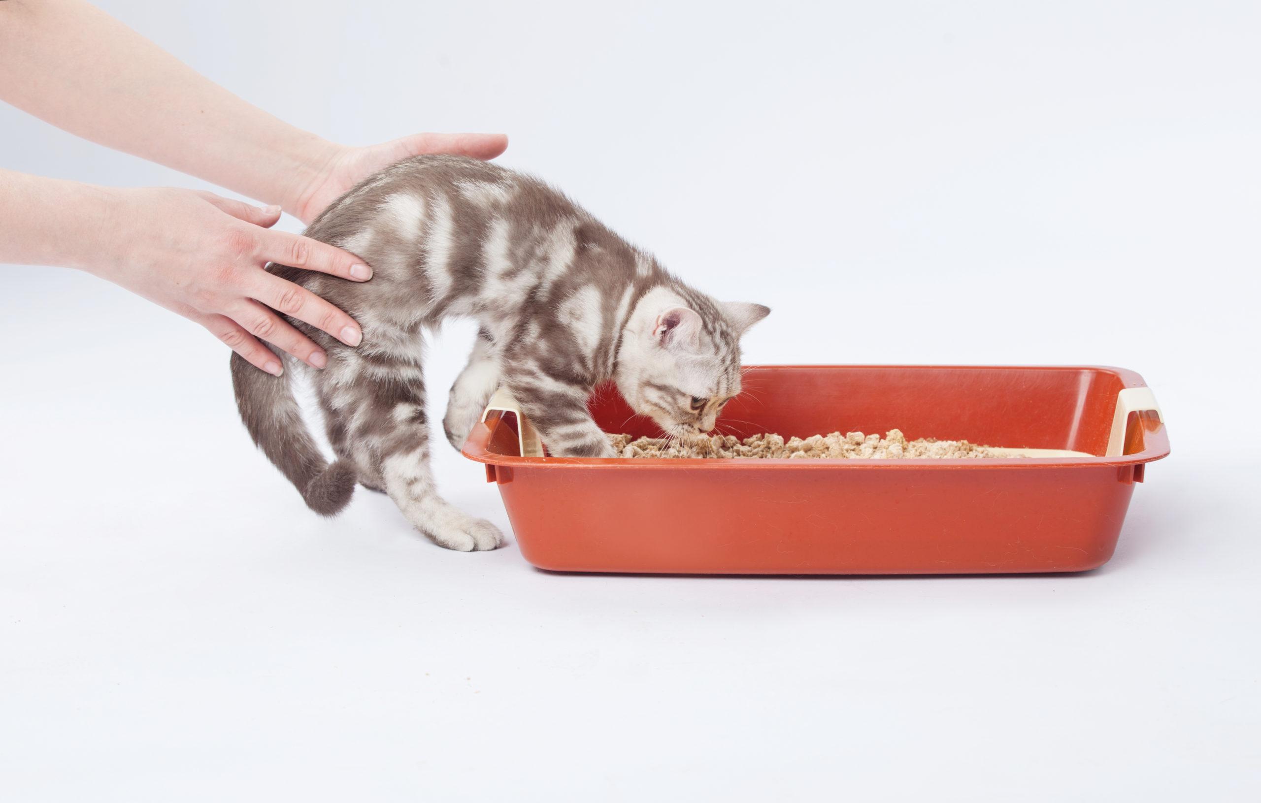 子ネコにトイレをしつける