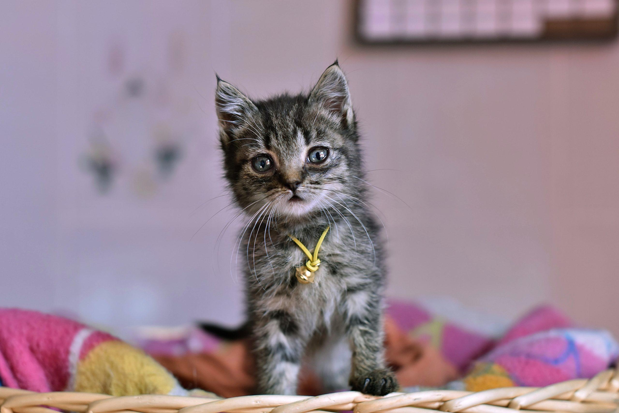 【2020年】猫の可愛い動画【猫が可愛くてずっと見ていられます】