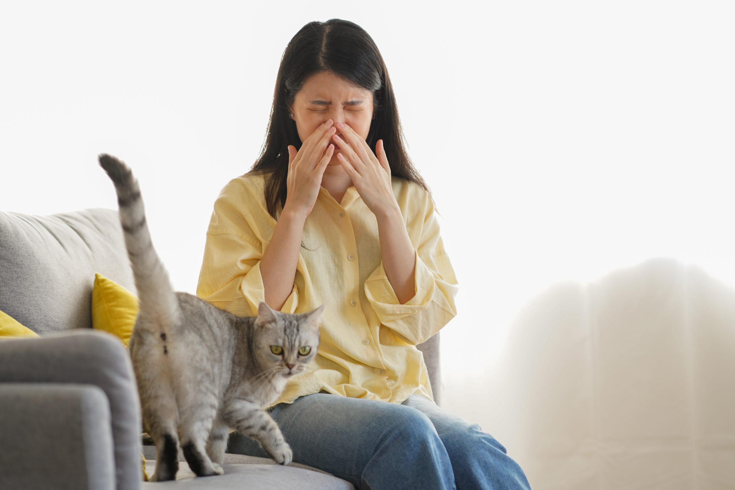 猫アレルギーでも猫を飼うことは可能?【自宅で出来る対策方法】