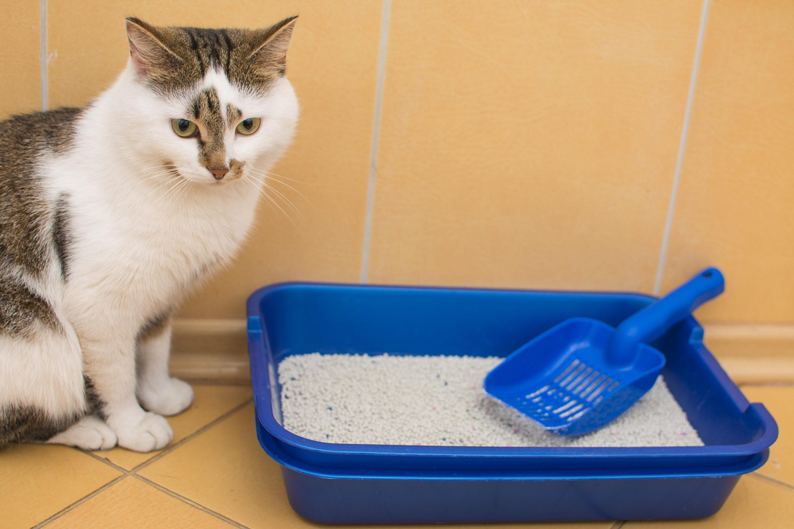 猫が使いやすいトイレとは?【猫が喜ぶ7つの環境】