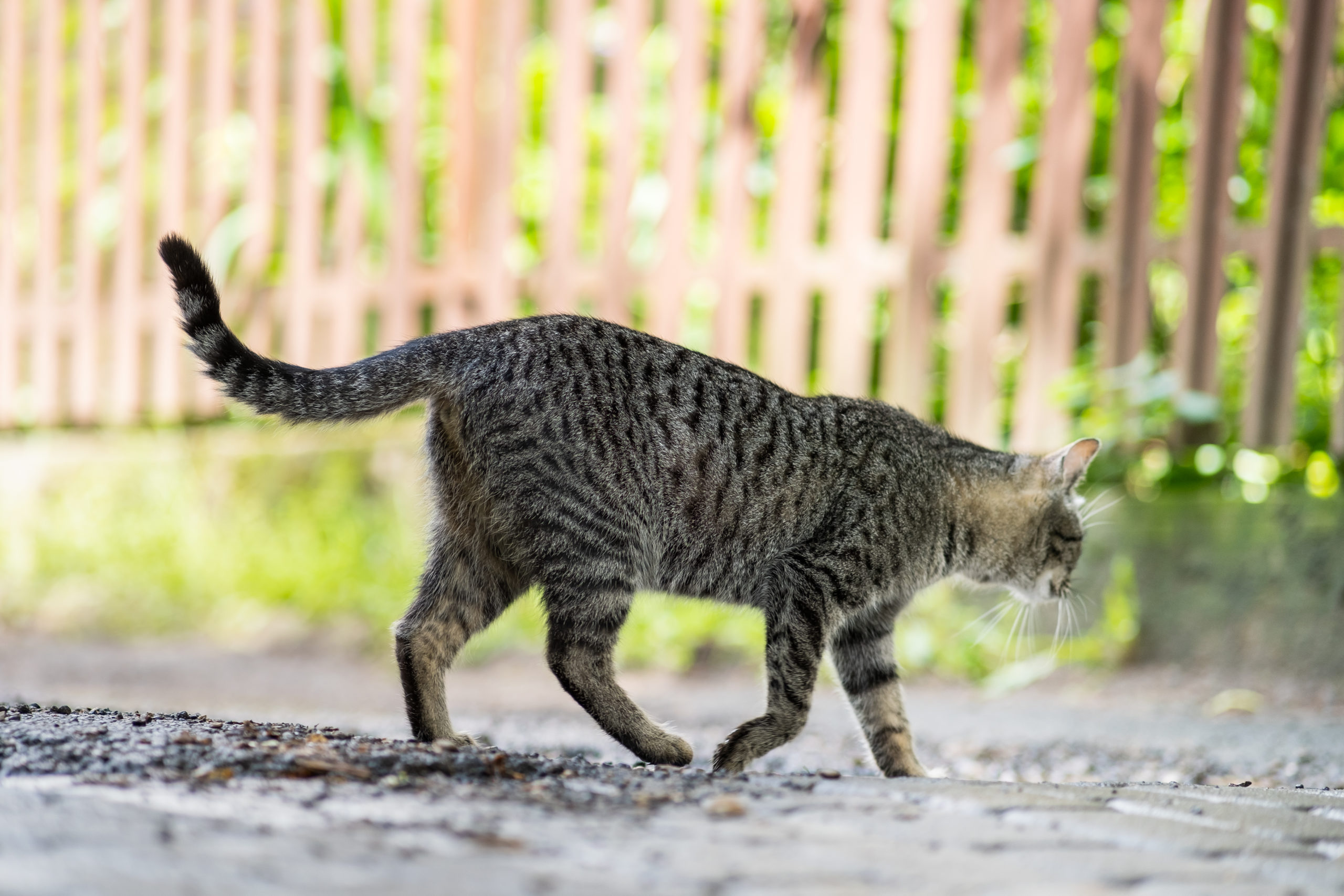 猫のしっぽの役割