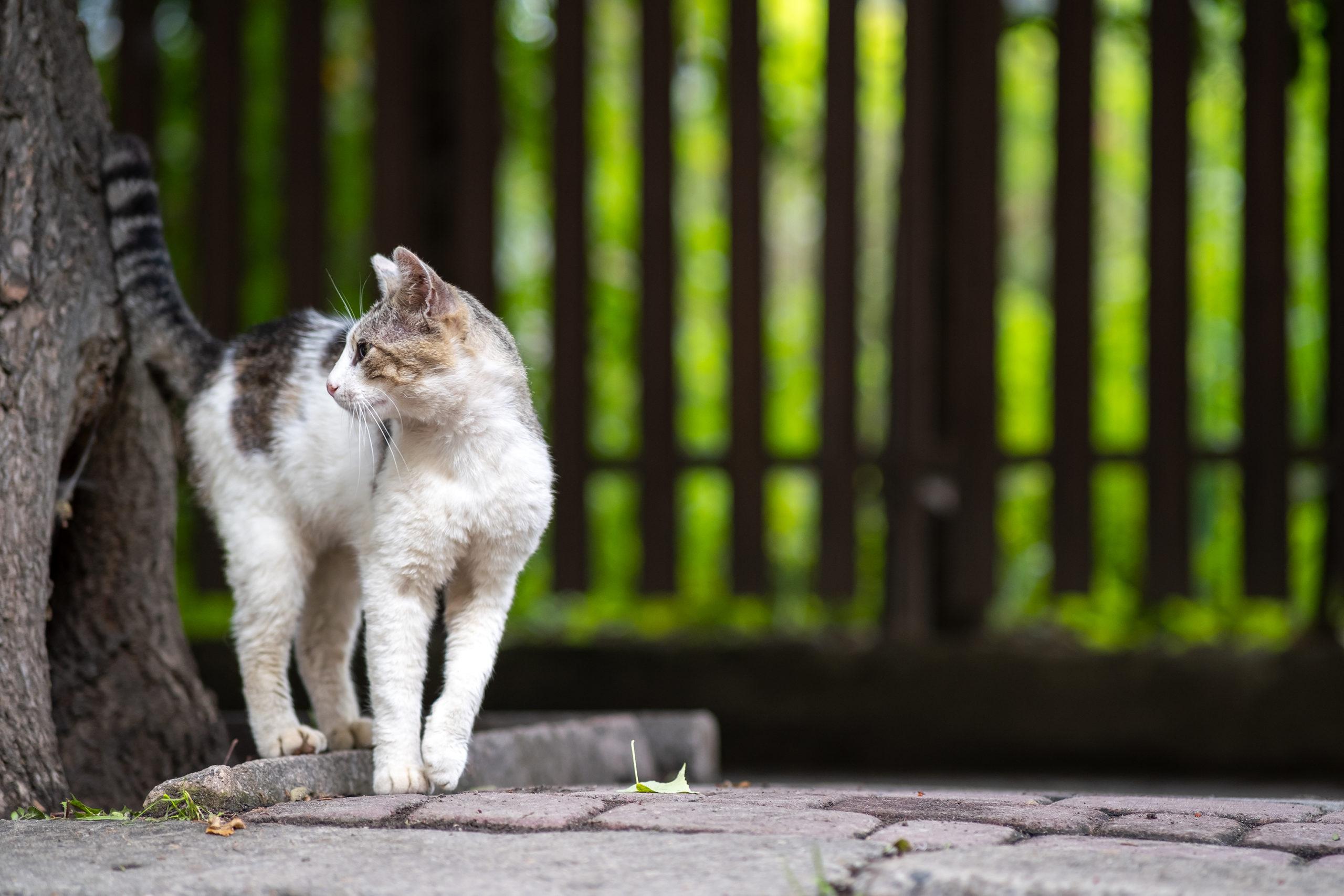 しっぽの動きで分かる猫の気持ち