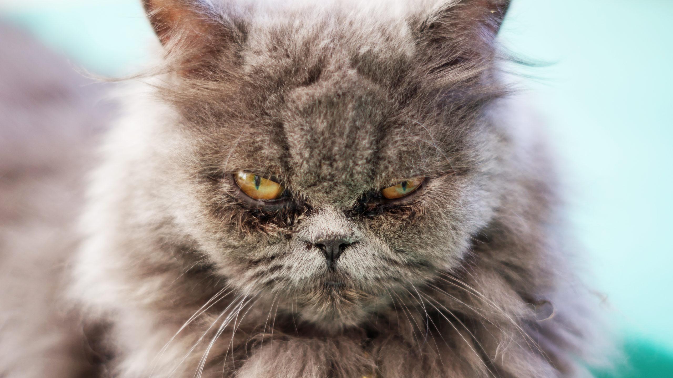 猫の涙と鼻水の原因は?