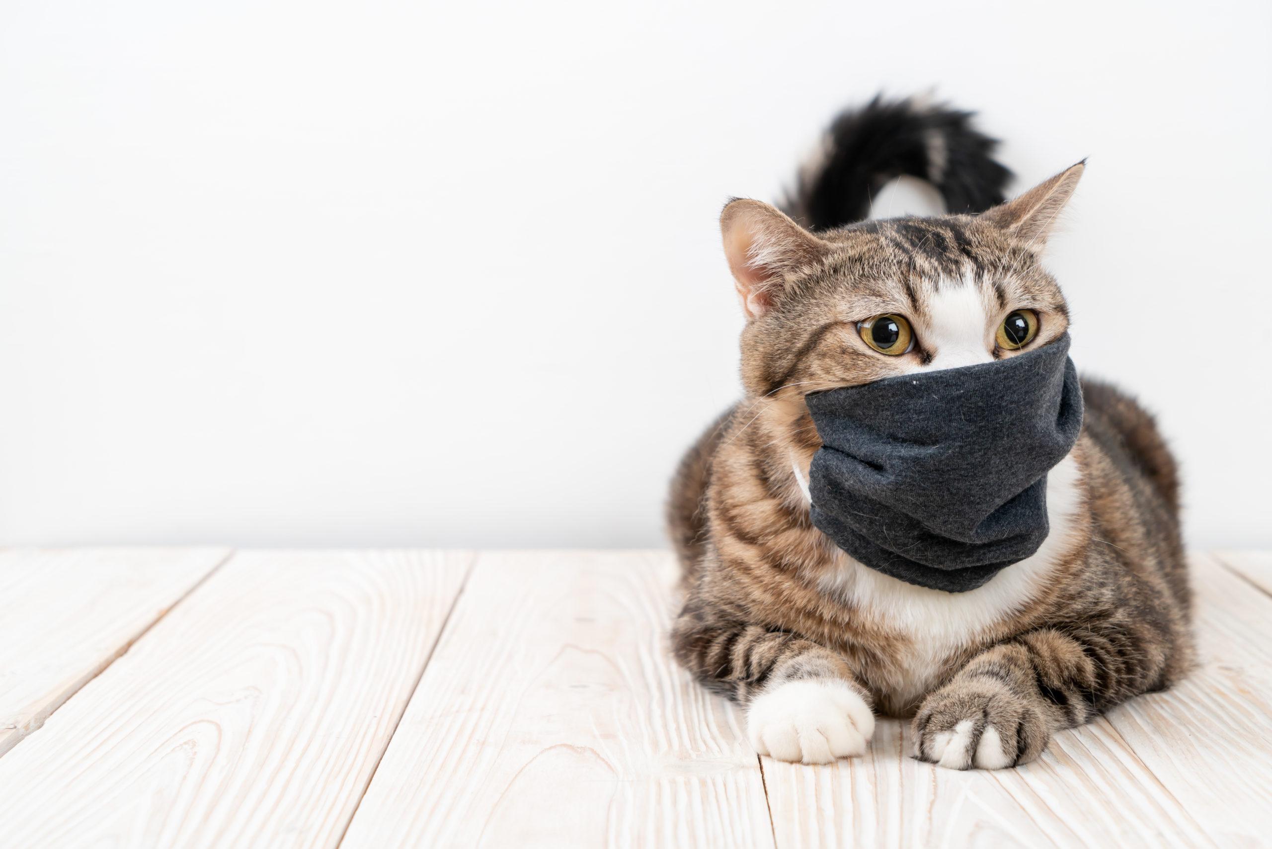 猫のくしゃみが連発するのはなぜ?【くしゃみの予防法アリ】