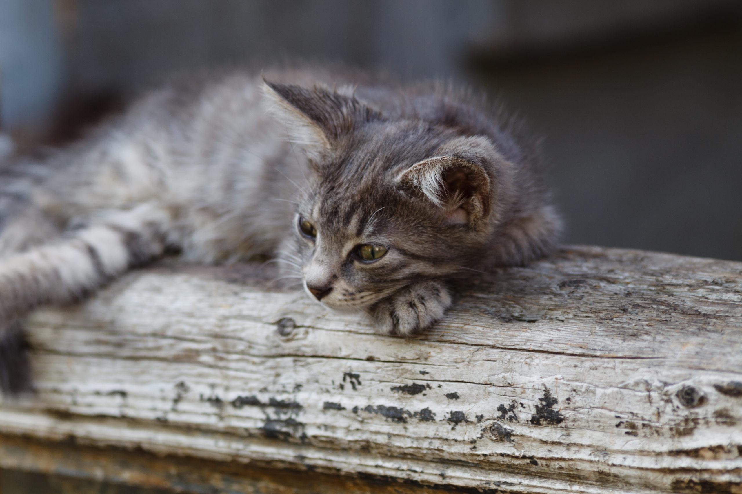 猫にとっての爪切りの必要性