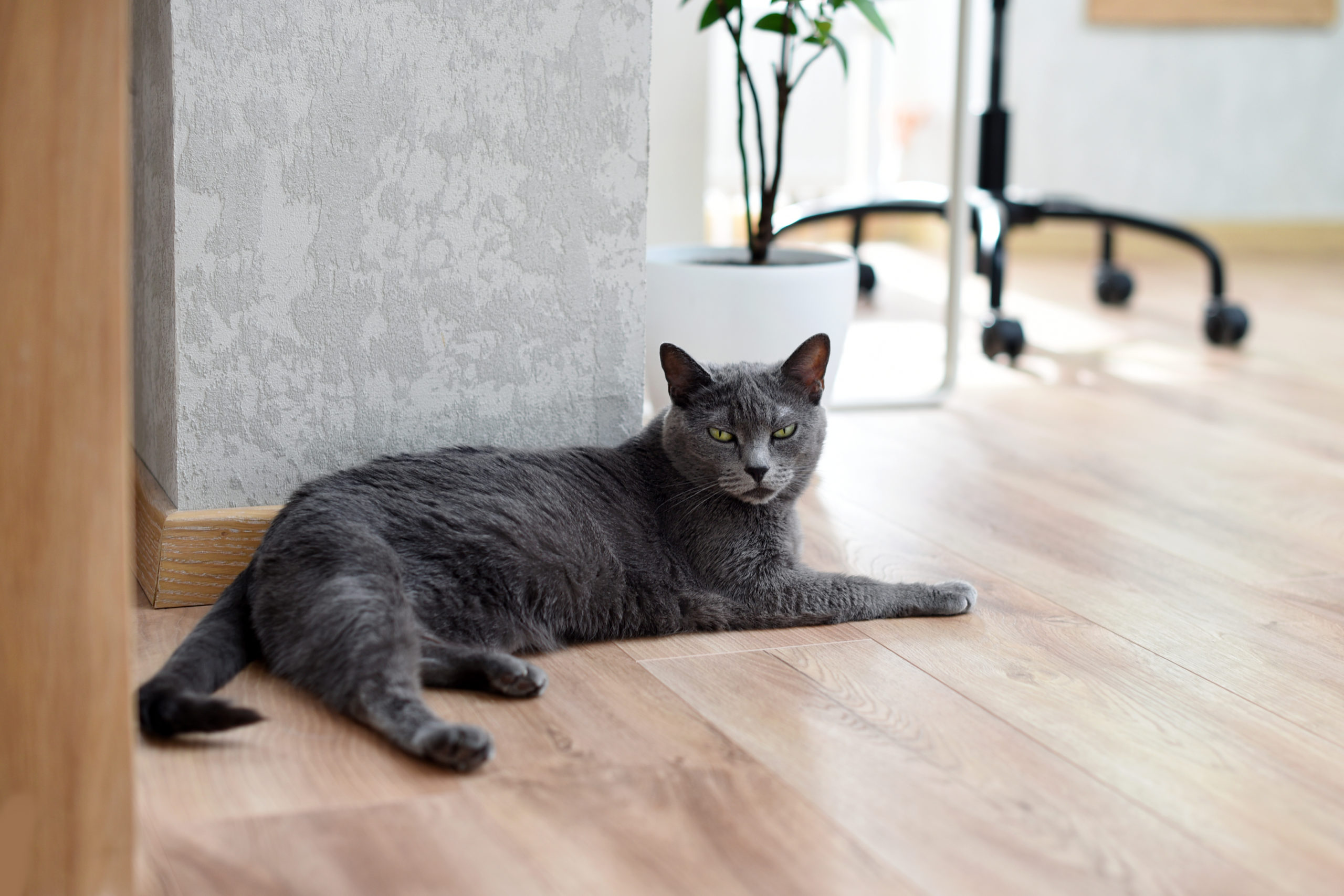 猫がご飯を食べないのはストレス?【食べない原因と4つの対策】