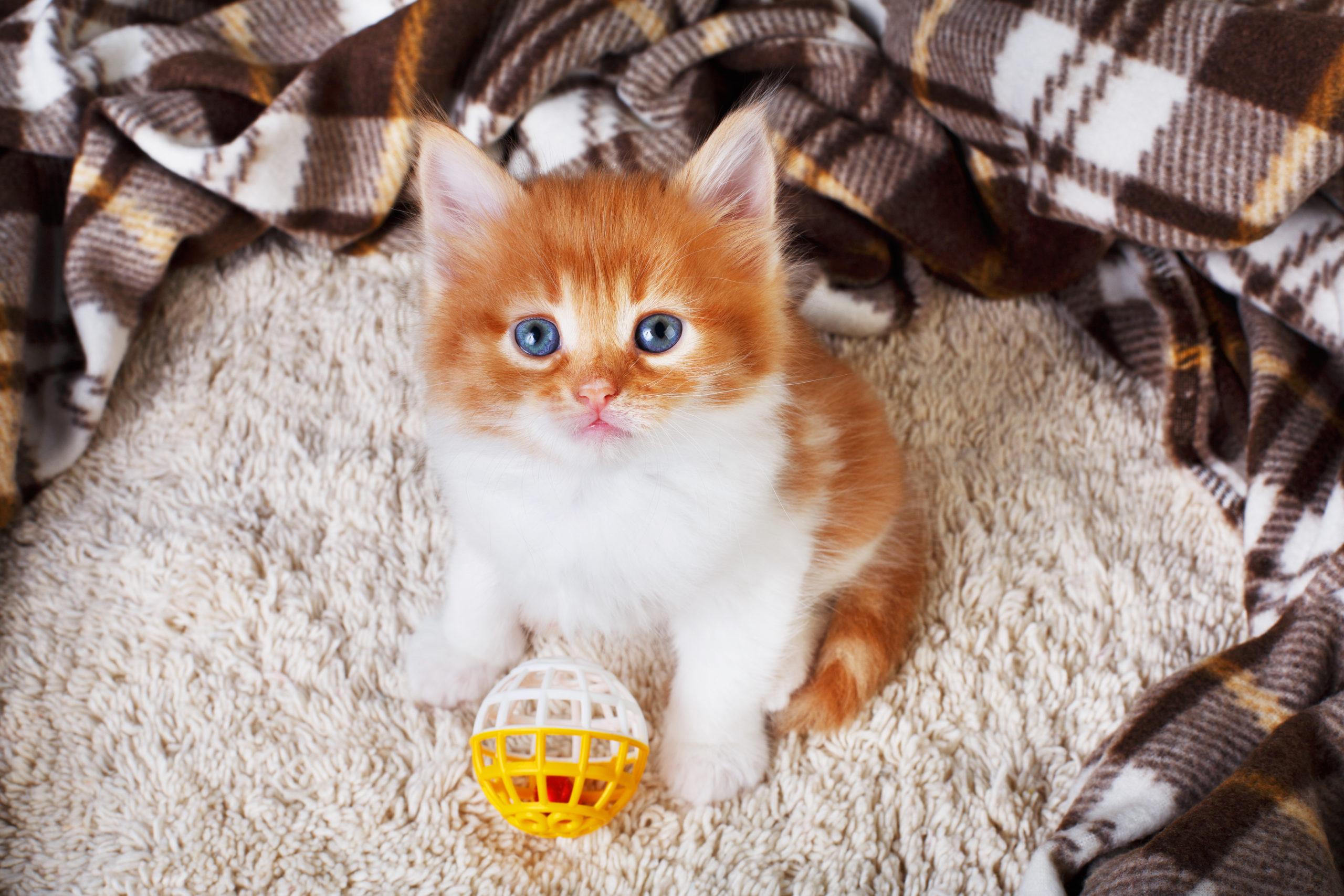 猫がおもちゃを持ってくる3つの理由とは【猫が喜ぶ遊び方】