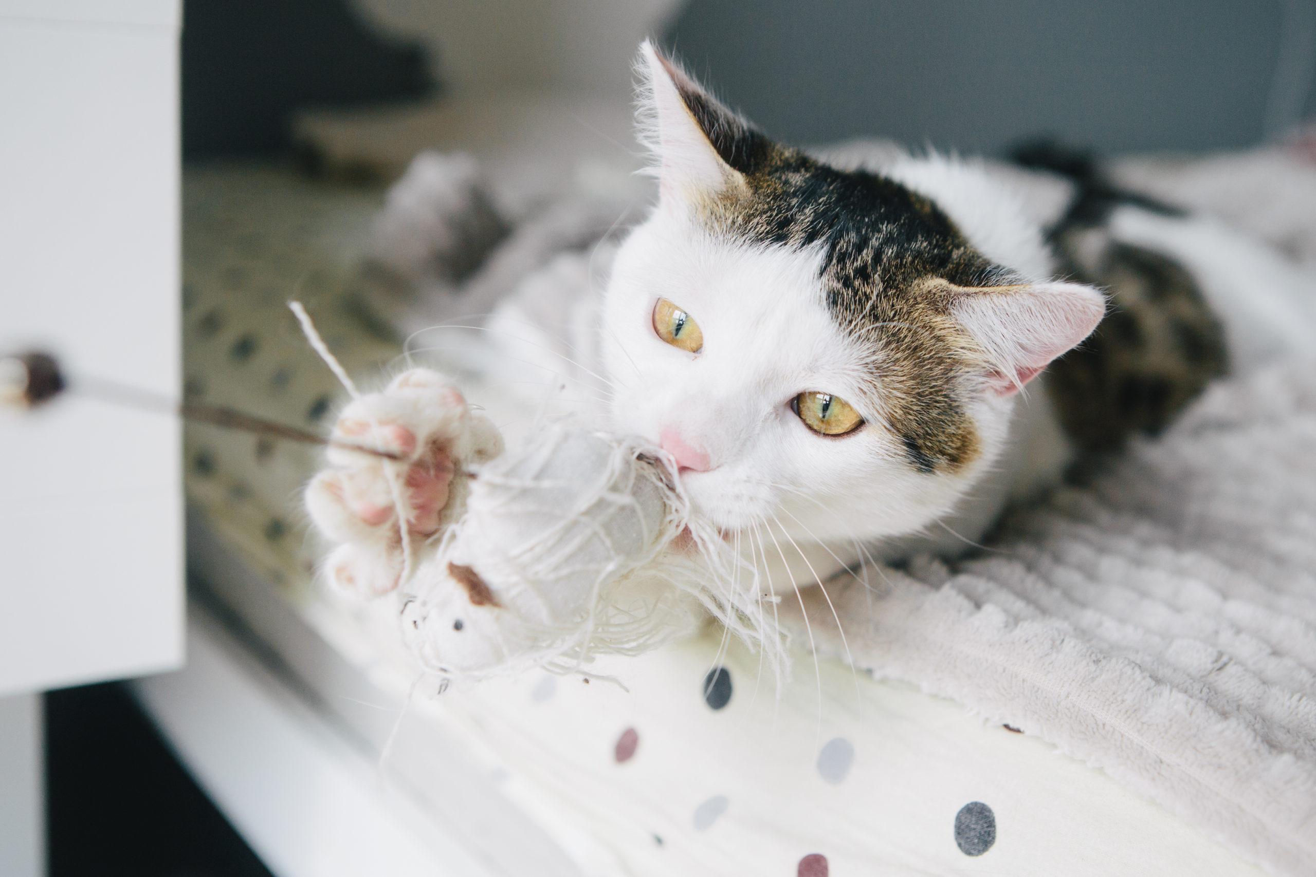 猫が飽きずに喜ぶ遊び方