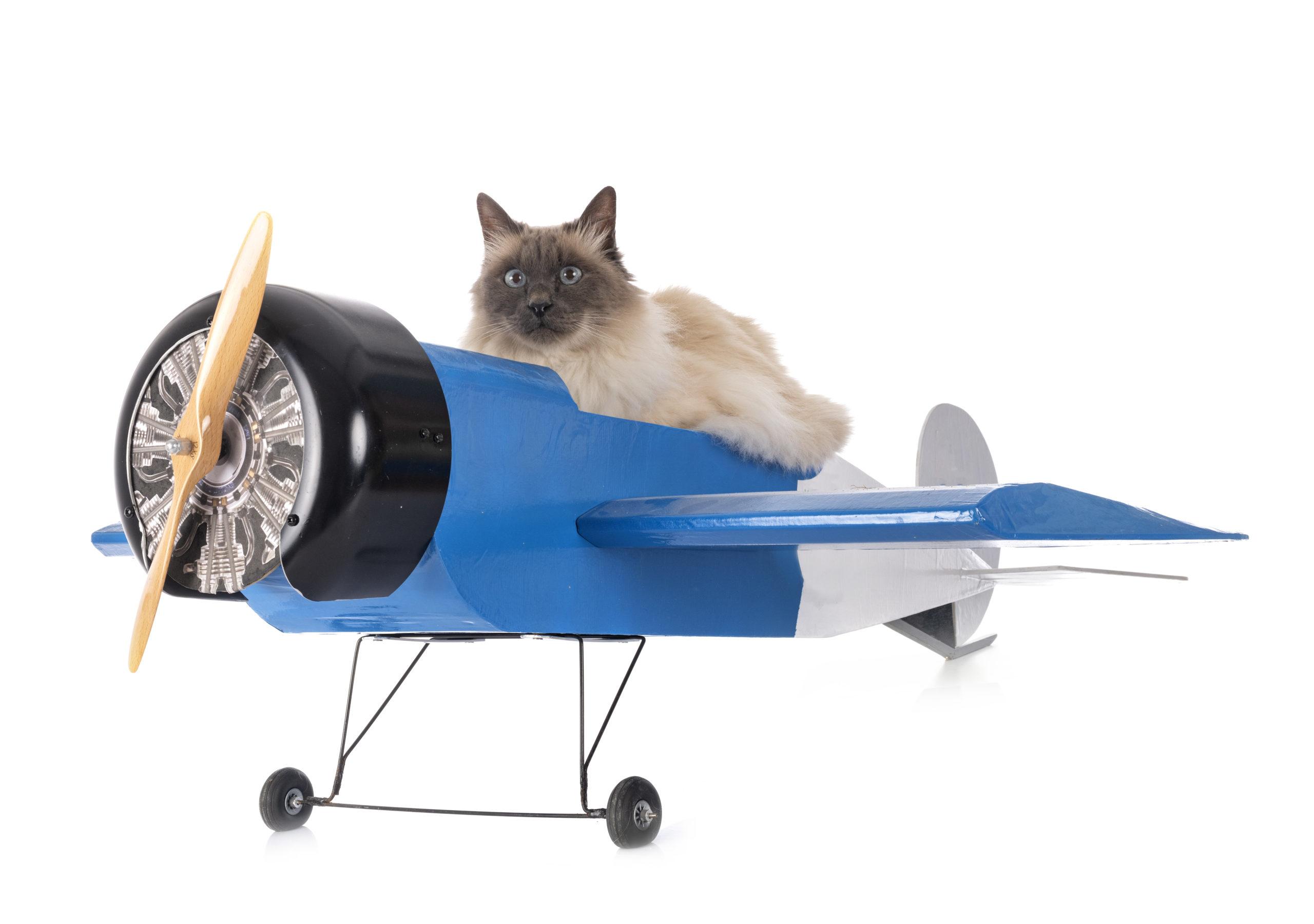 猫が飽きずにおもちゃで遊ぶ3つの方法