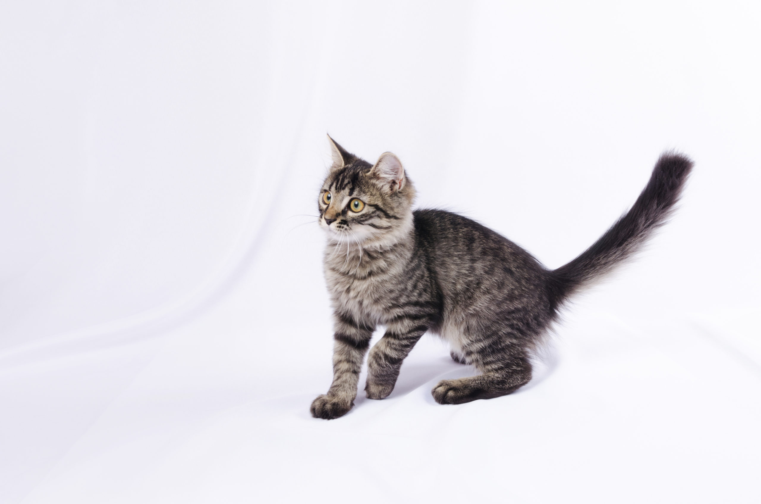猫がしっぽを振る6つの意味とは?【しっぽの振り方で気持ちを理解】
