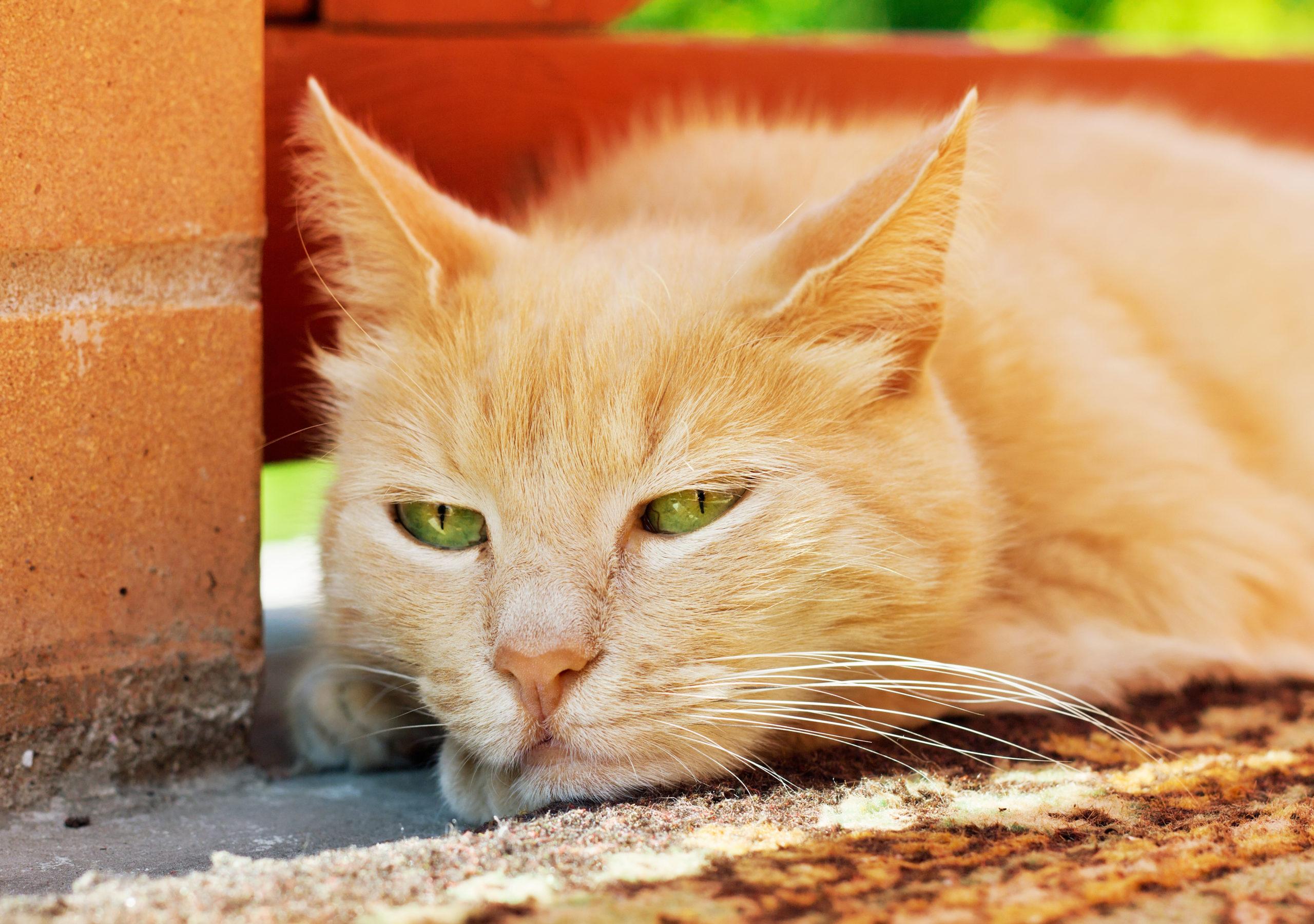 猫がストレスによりご飯を食べない時の3つの対策