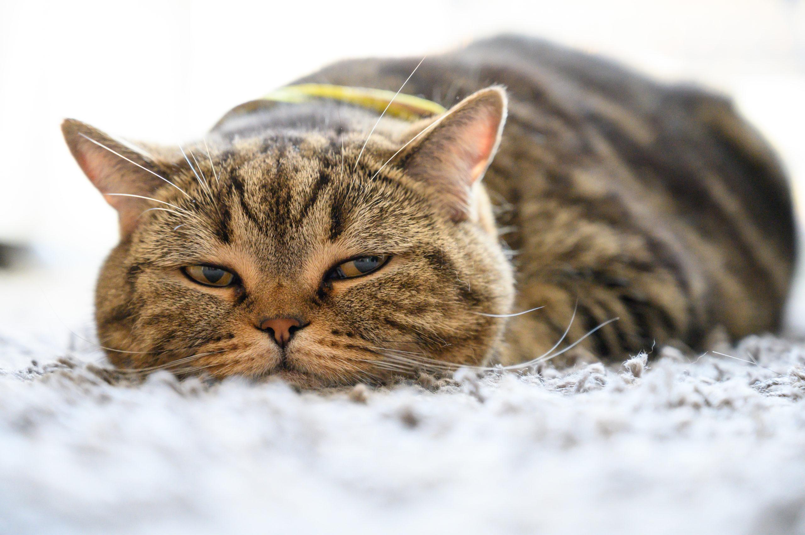 猫がストレスでご飯を食べない時の3つの原因