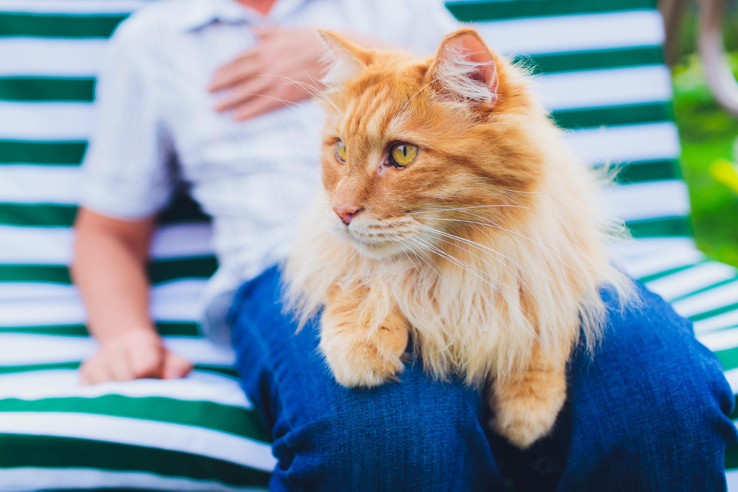 猫にお尻を向けられた時の飼い主の対応
