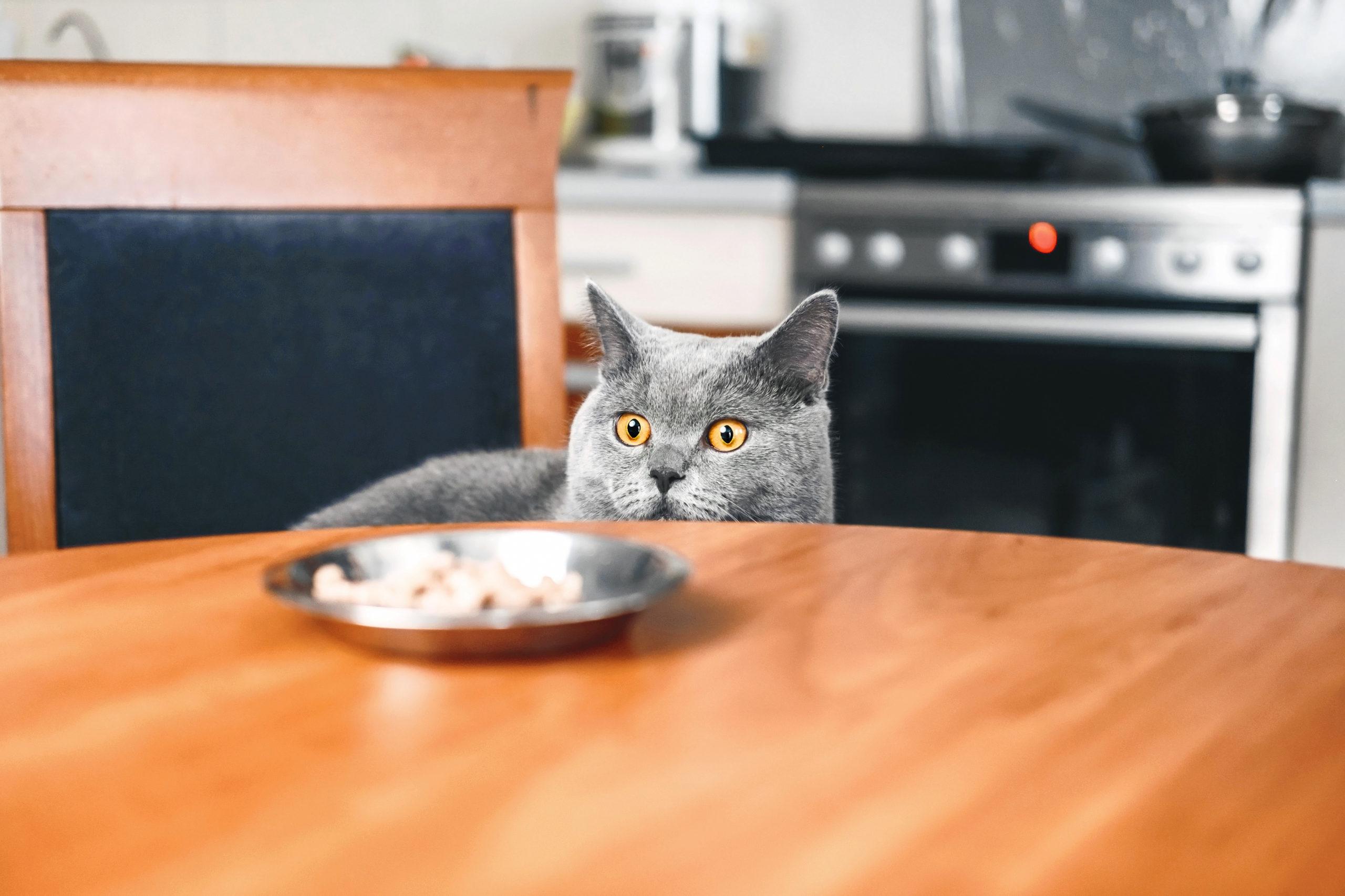 猫のご飯は何が良いの?【気になるご飯の選び方や回数】