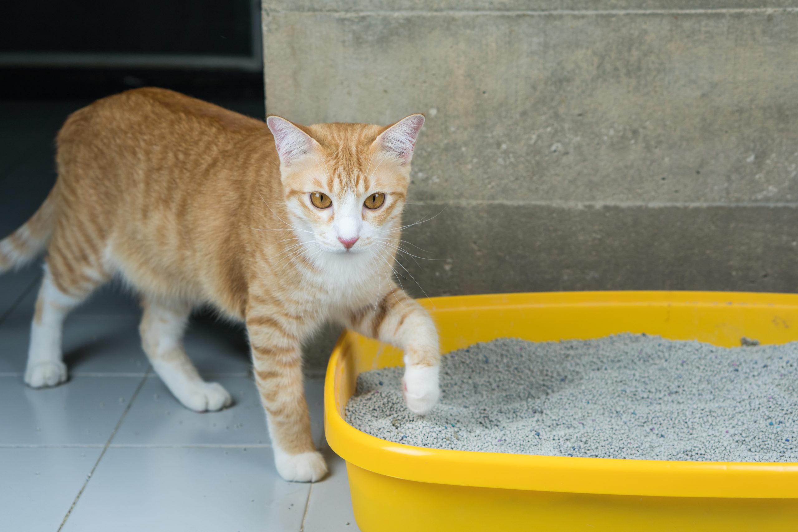 猫がトイレを気に入らないサイン