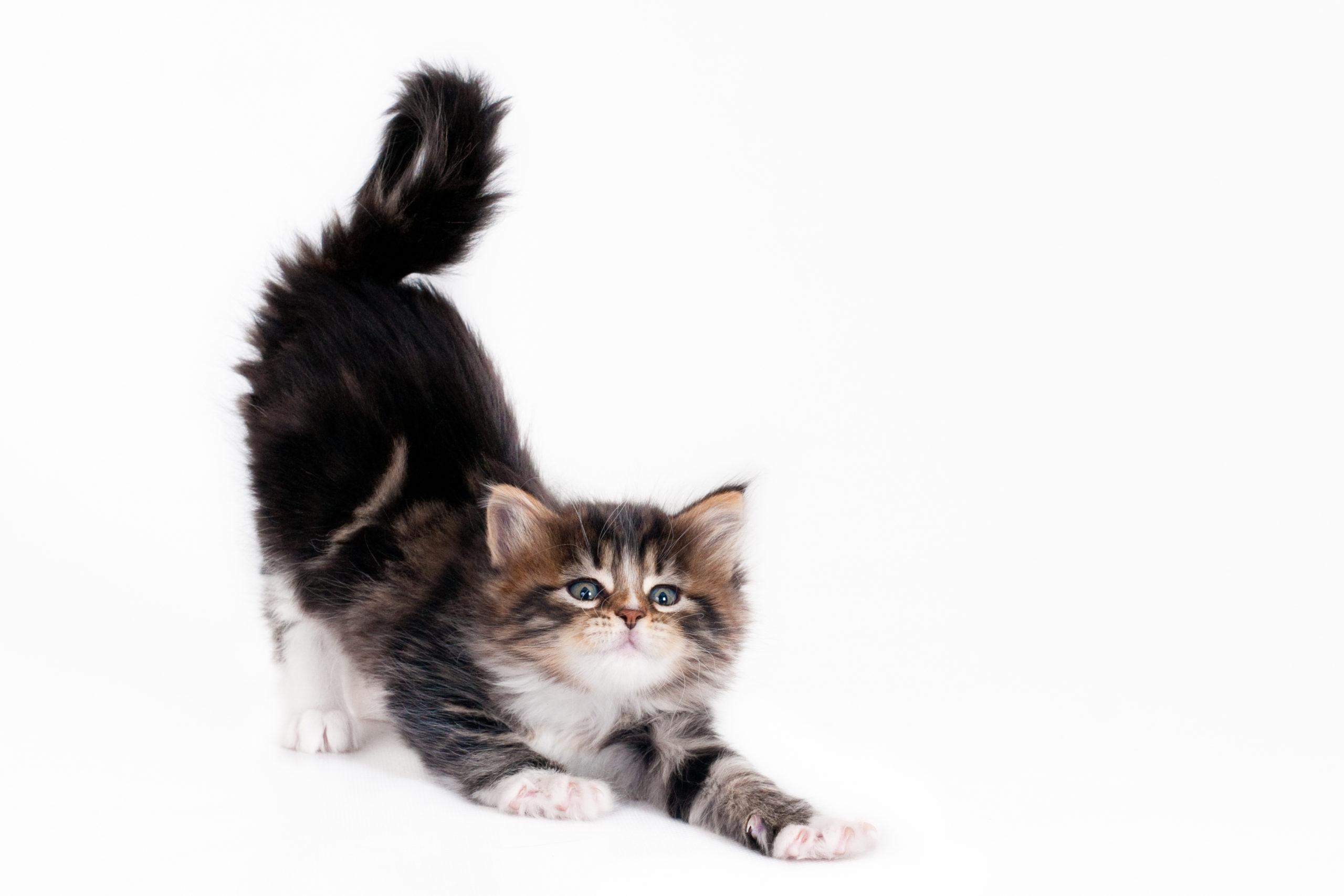 猫はおならをする?