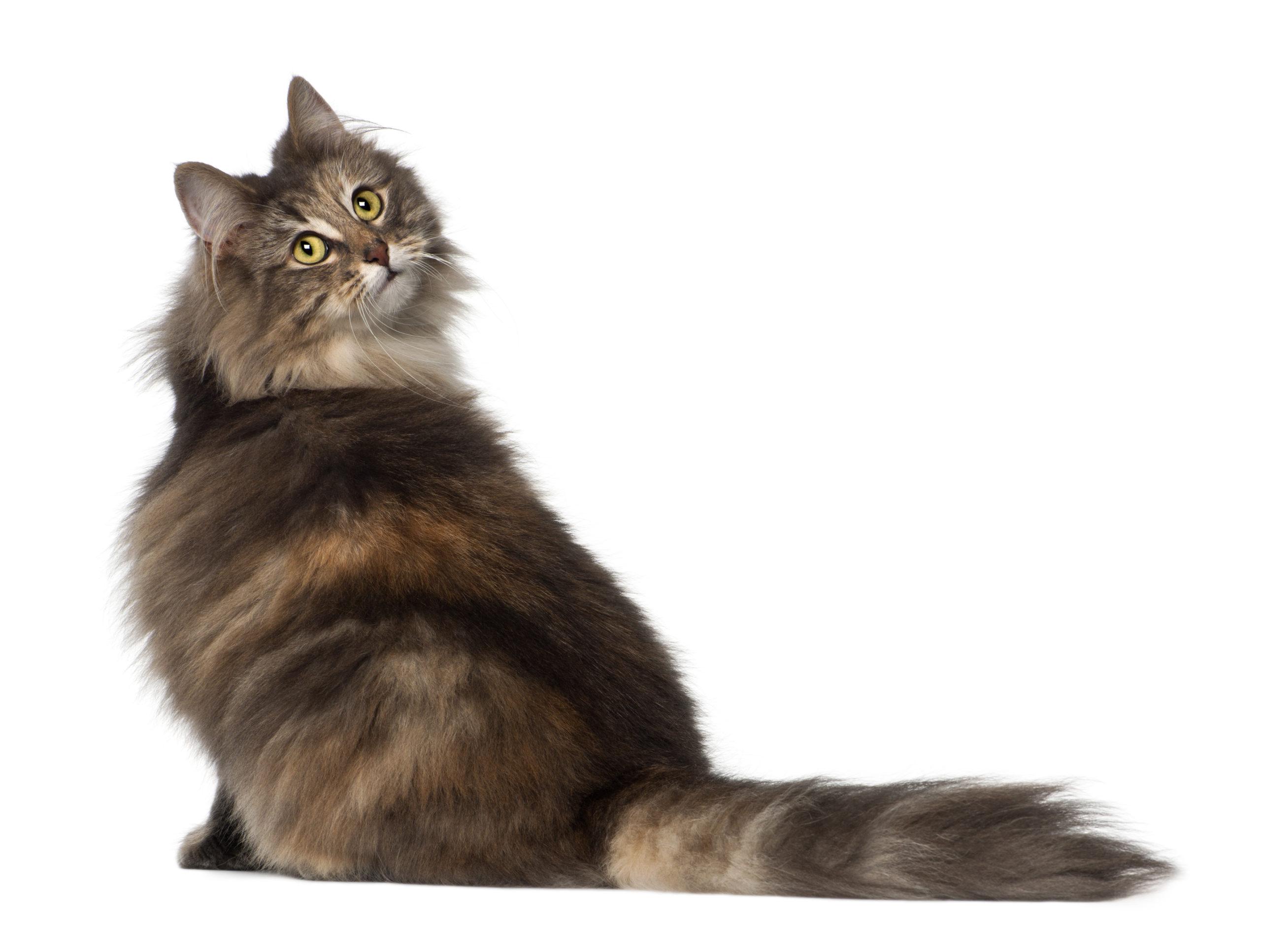 猫がお尻を向けている時の5つの気持ちとは?【お尻は信頼の証】