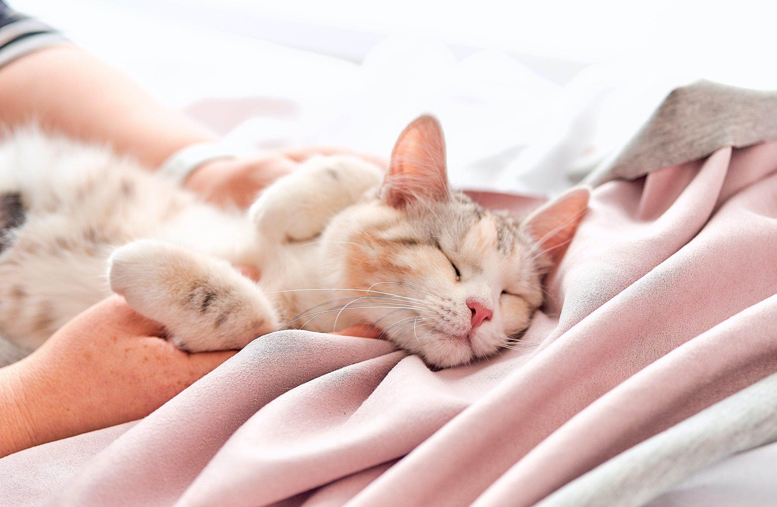 猫の寝る場所