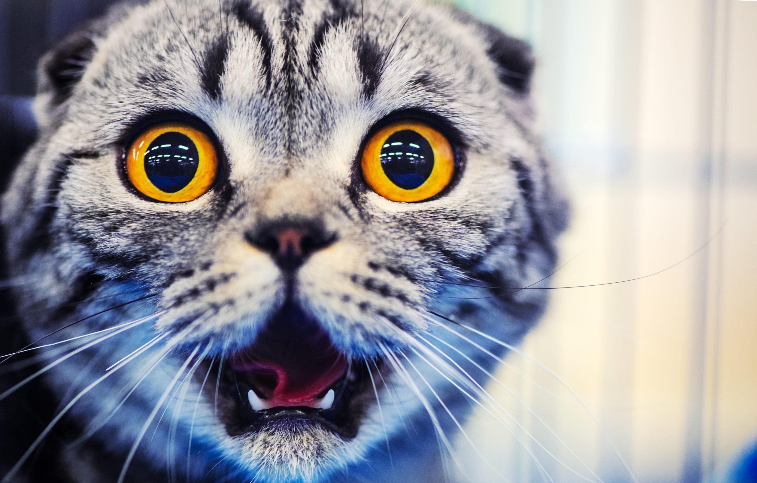 【2020】猫のくしゃみ動画【可愛い・面白い・番外編】