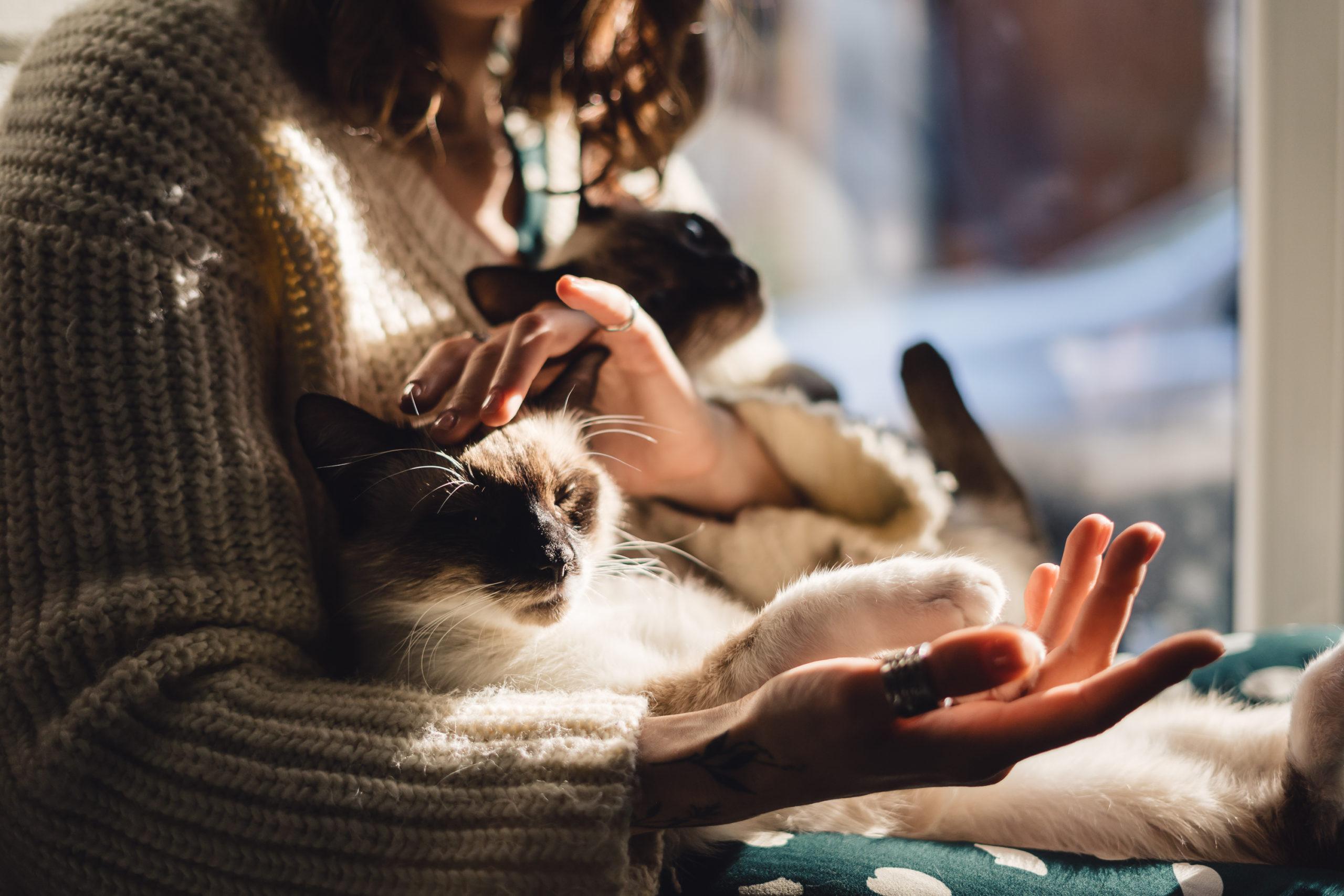 猫がしっぽをプルプル震わせている意味
