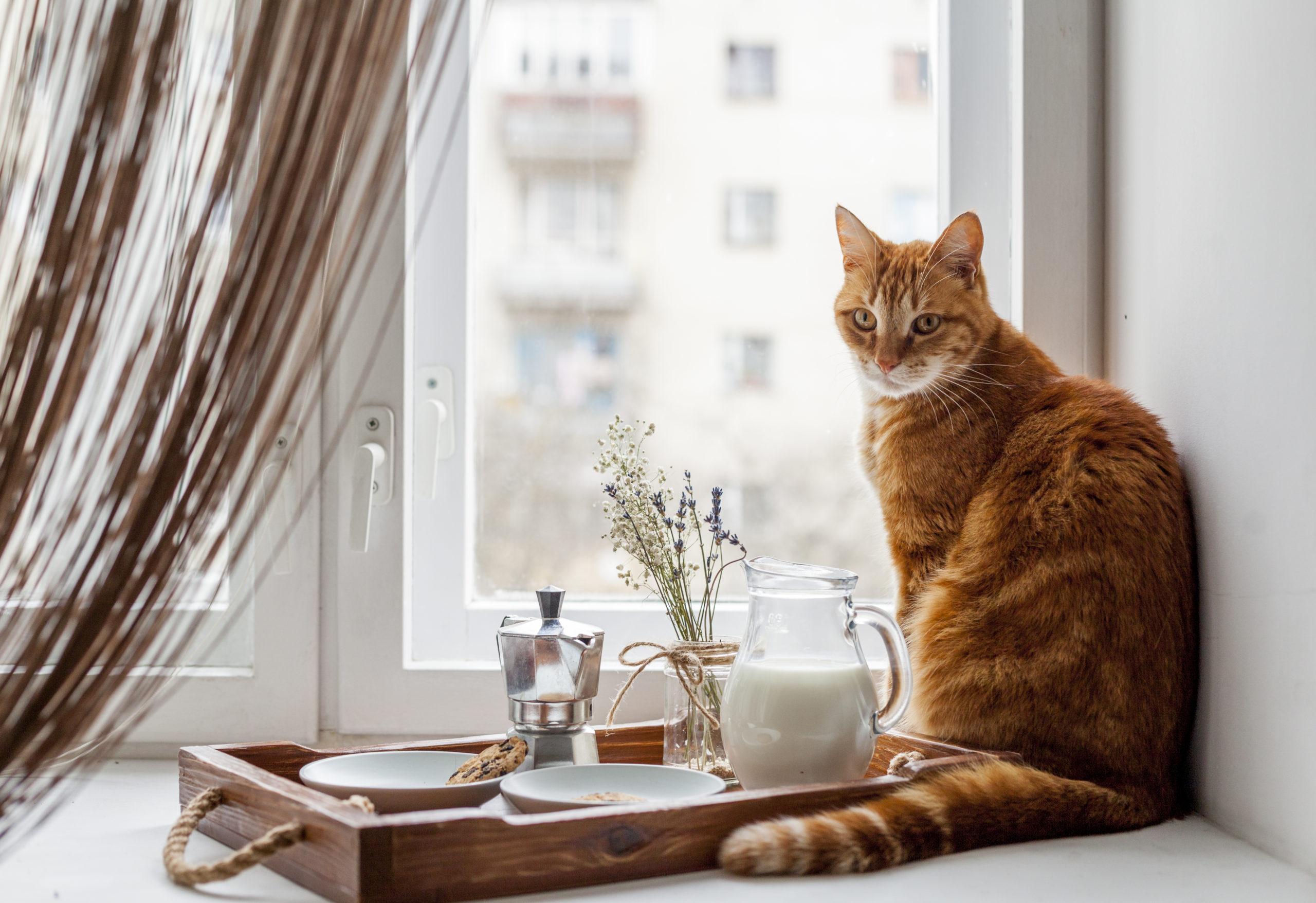猫がご飯を食べない時の工夫とは?【自宅で出来る5つの工夫】