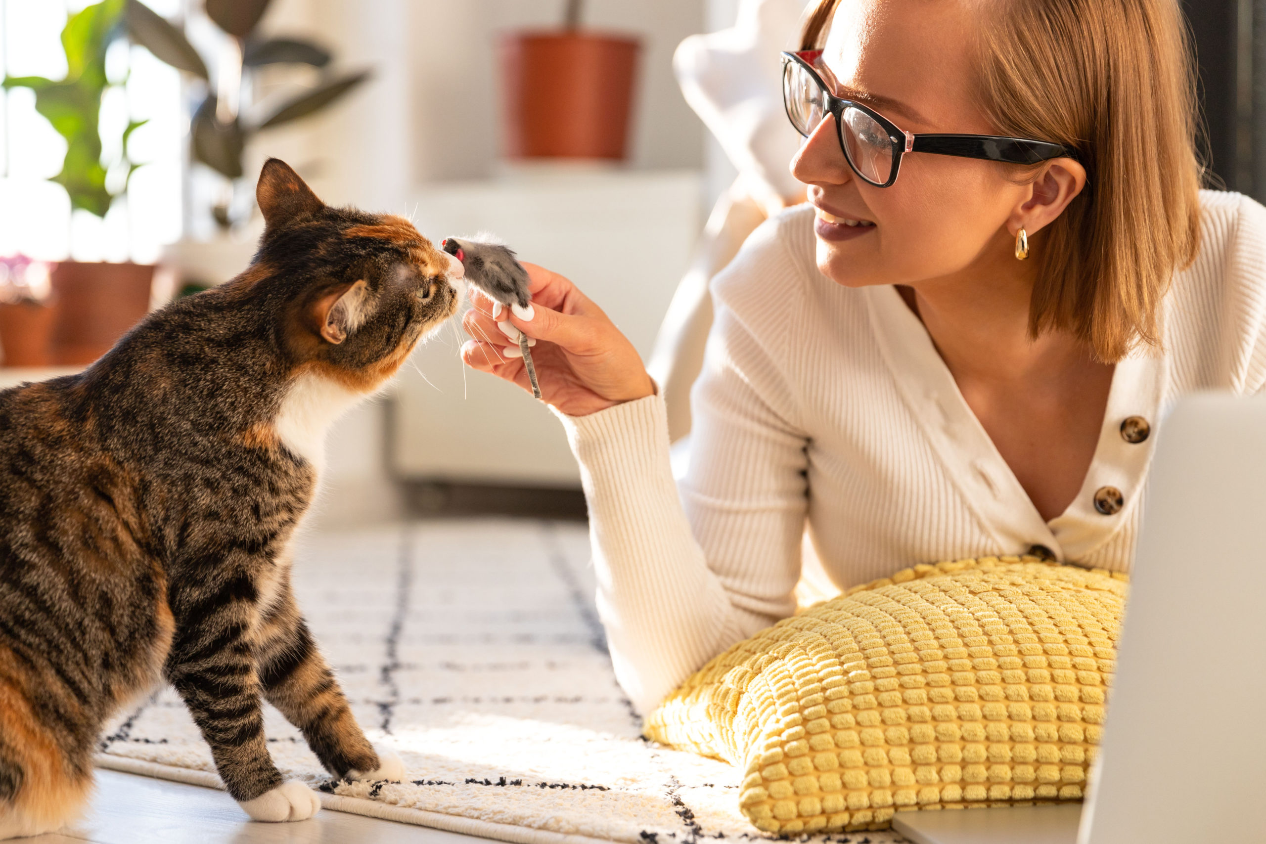 猫がおもちゃを持ってくる動画【遊んで欲しくてたまらない猫】