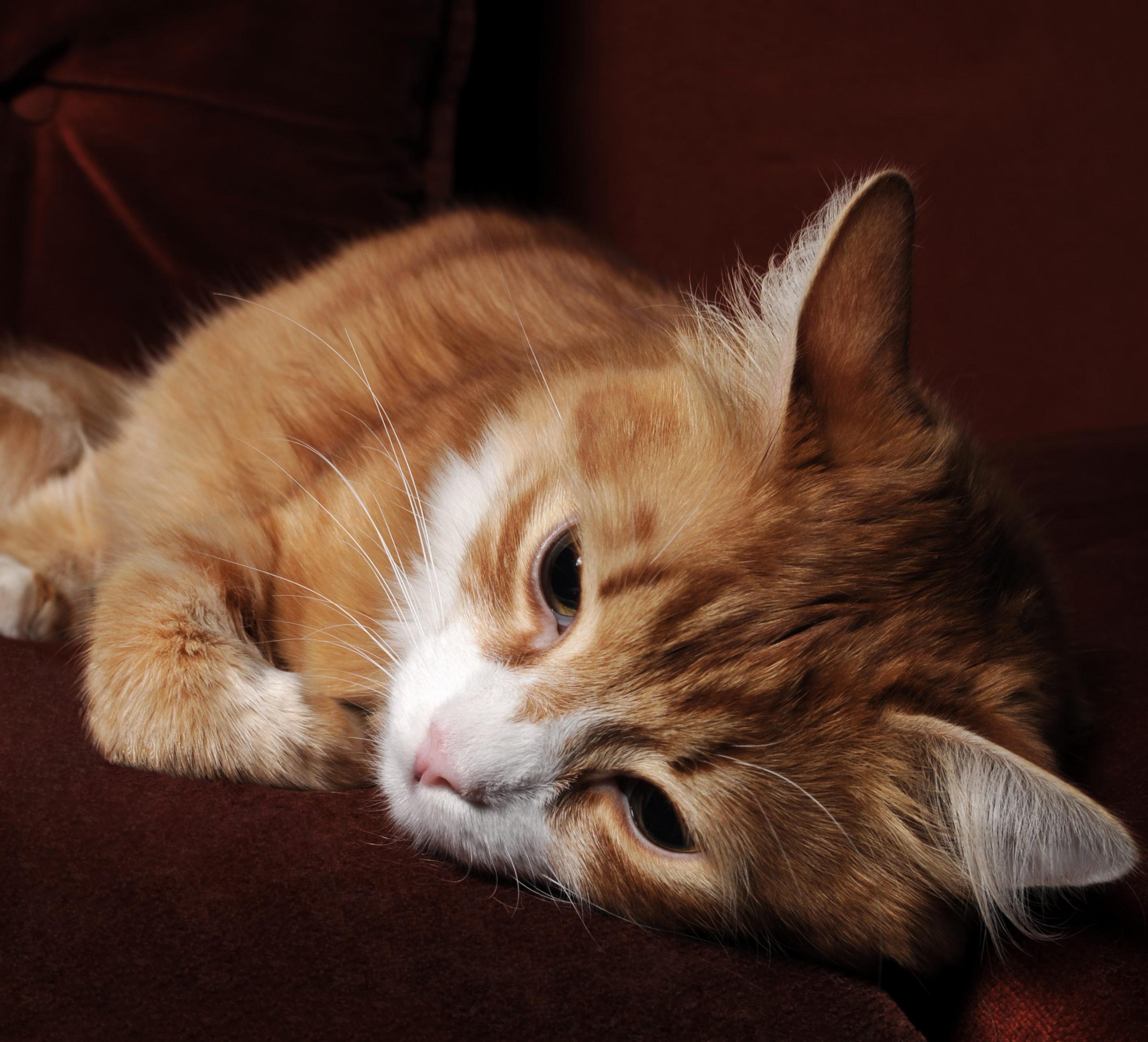 猫が夏バテでご飯を食べないのはなぜ?
