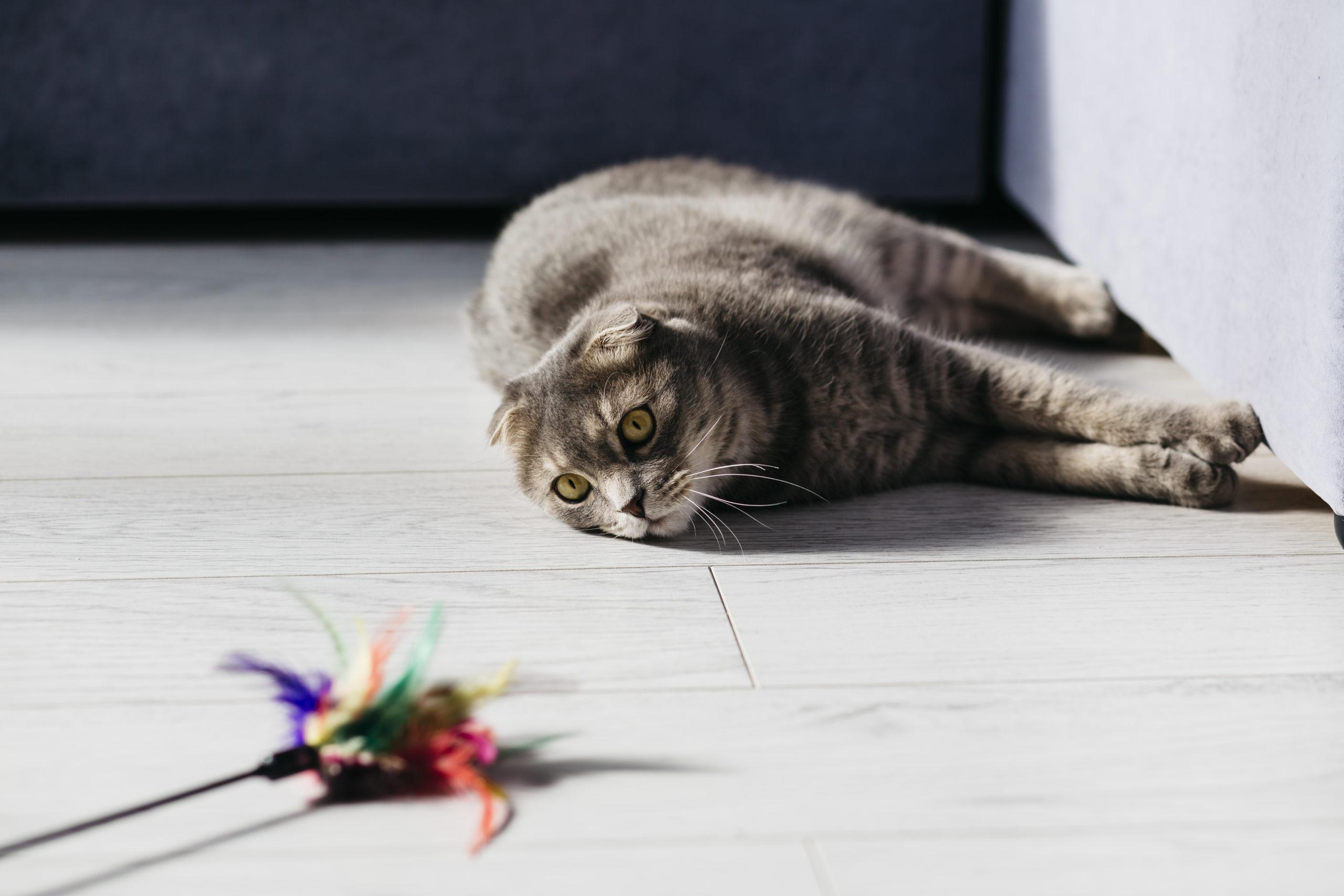 猫がおもちゃを飽きるのはなぜ?【猫が飽きる3つの理由】