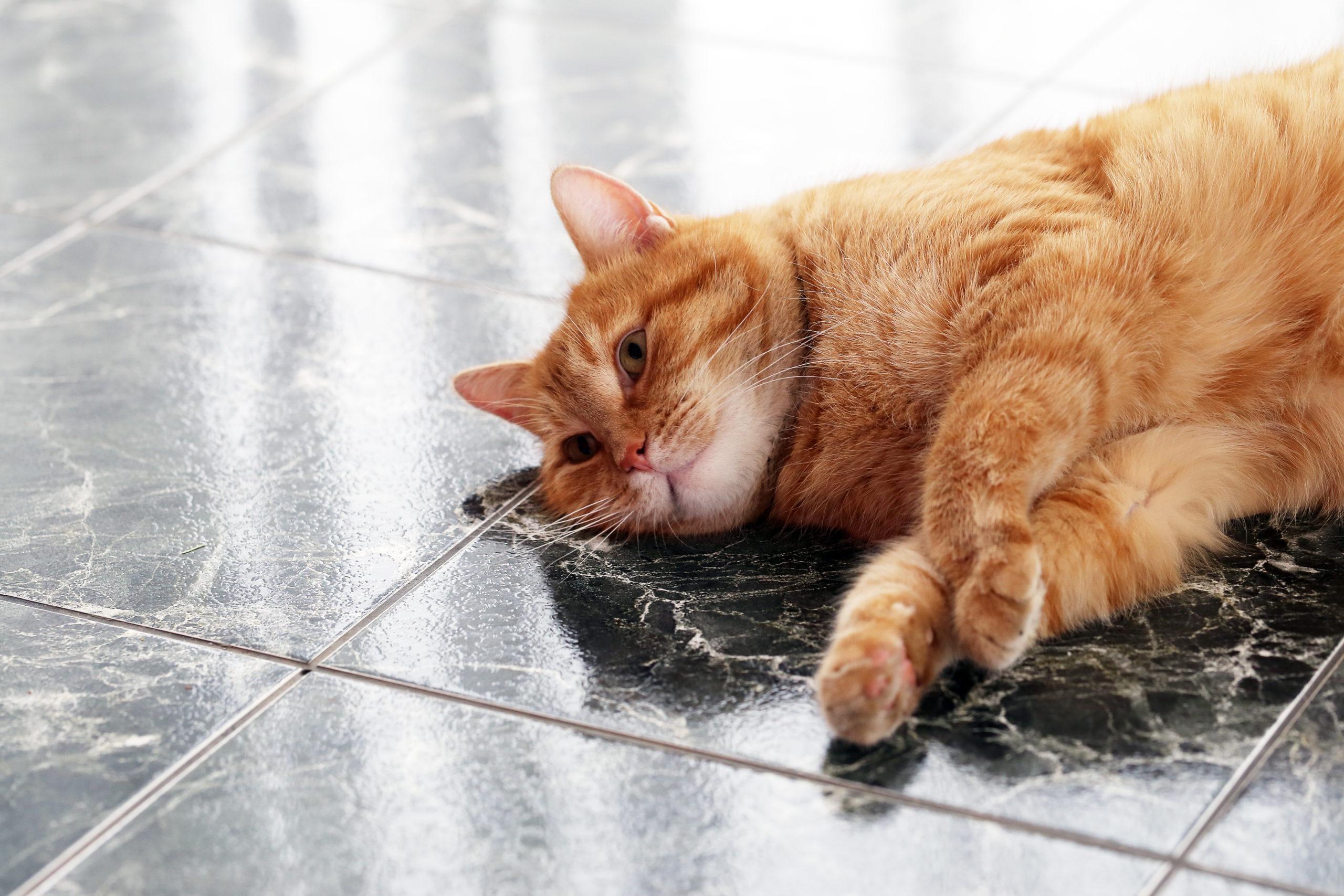 猫が夏バテでご飯を食べないのはなぜ?【自宅で出来る簡単な対策】