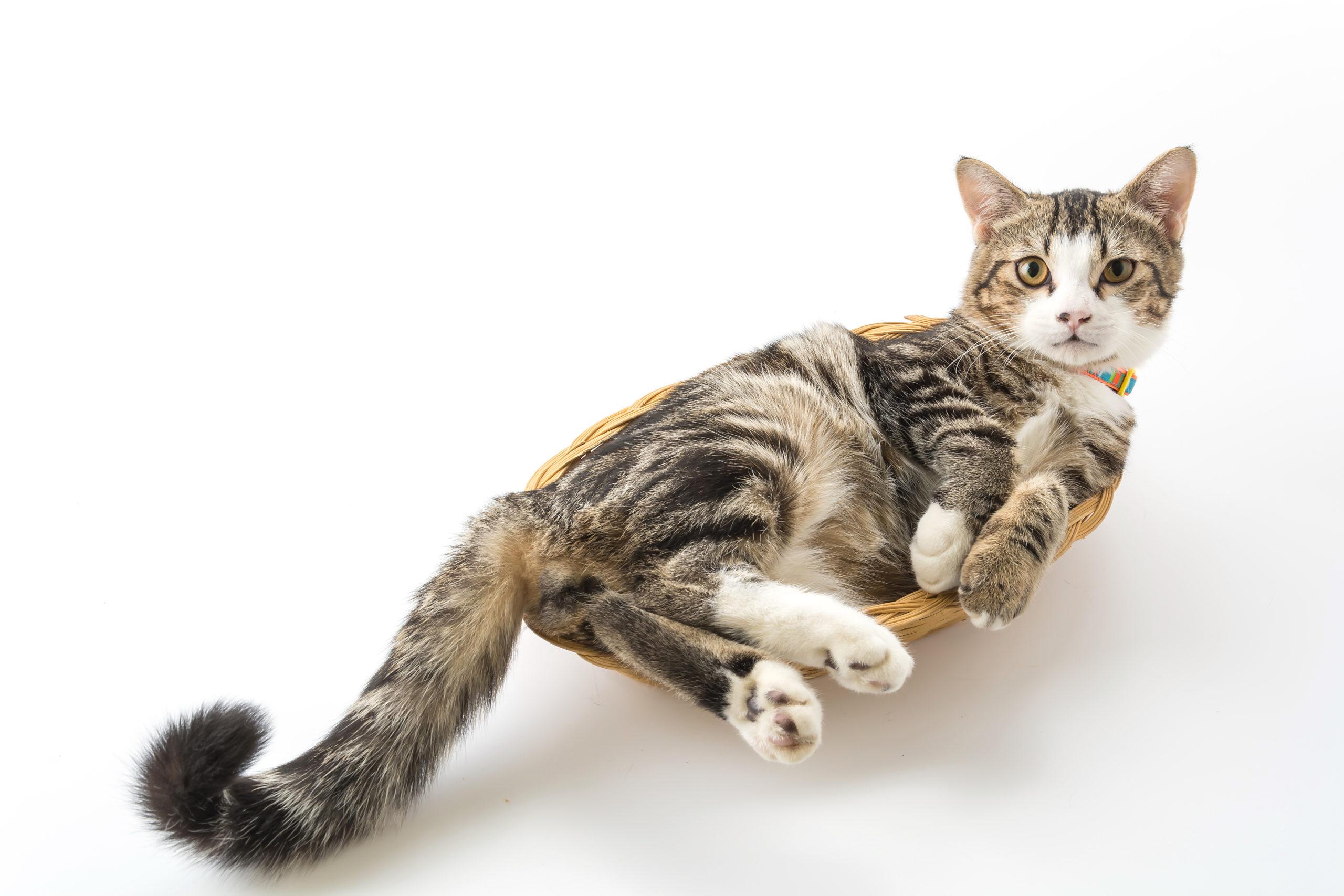 猫がしっぽをプルプルと震わせている時の3つの気持ち