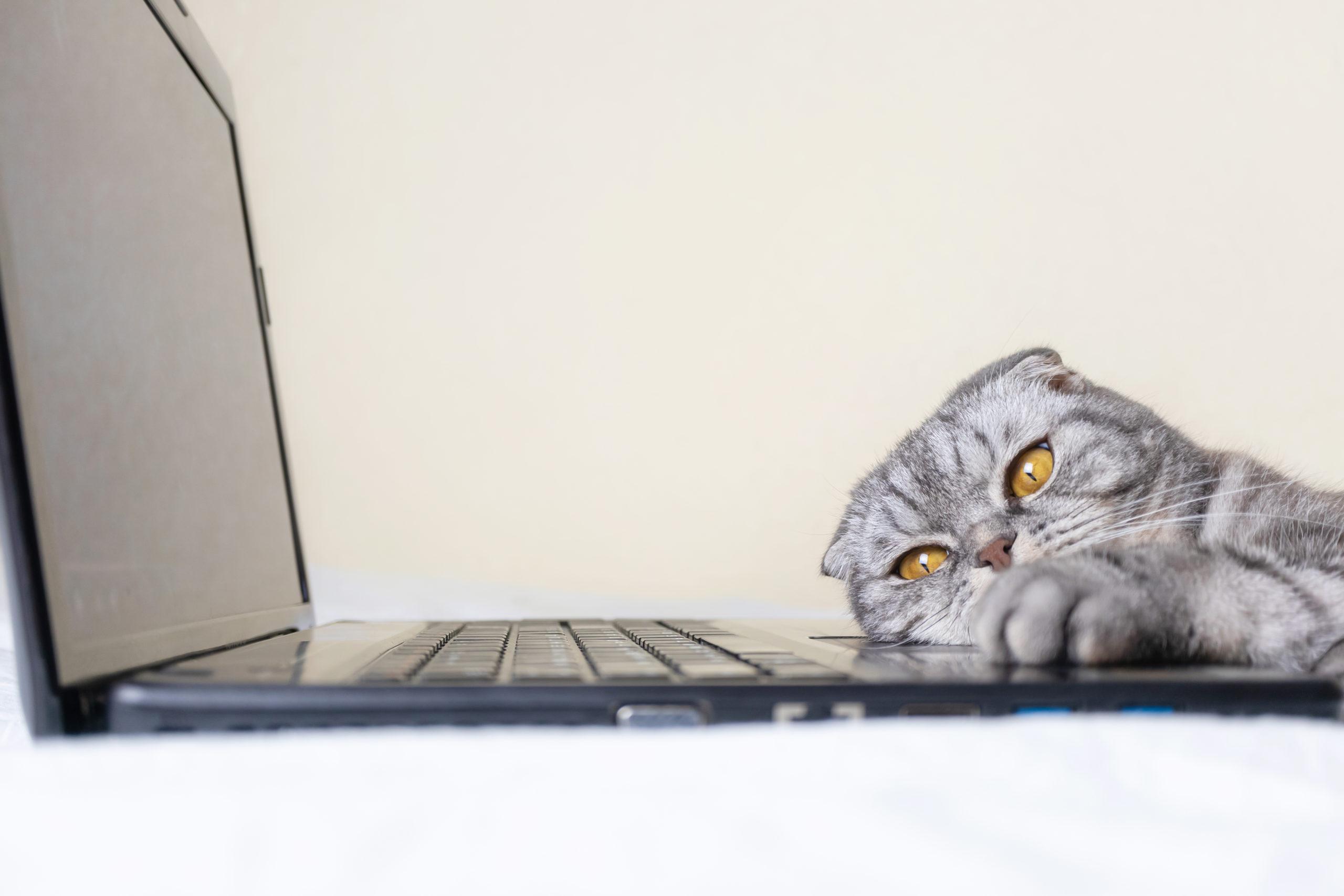猫のおもしろ特集【思わず笑えて癒される動画・画像】