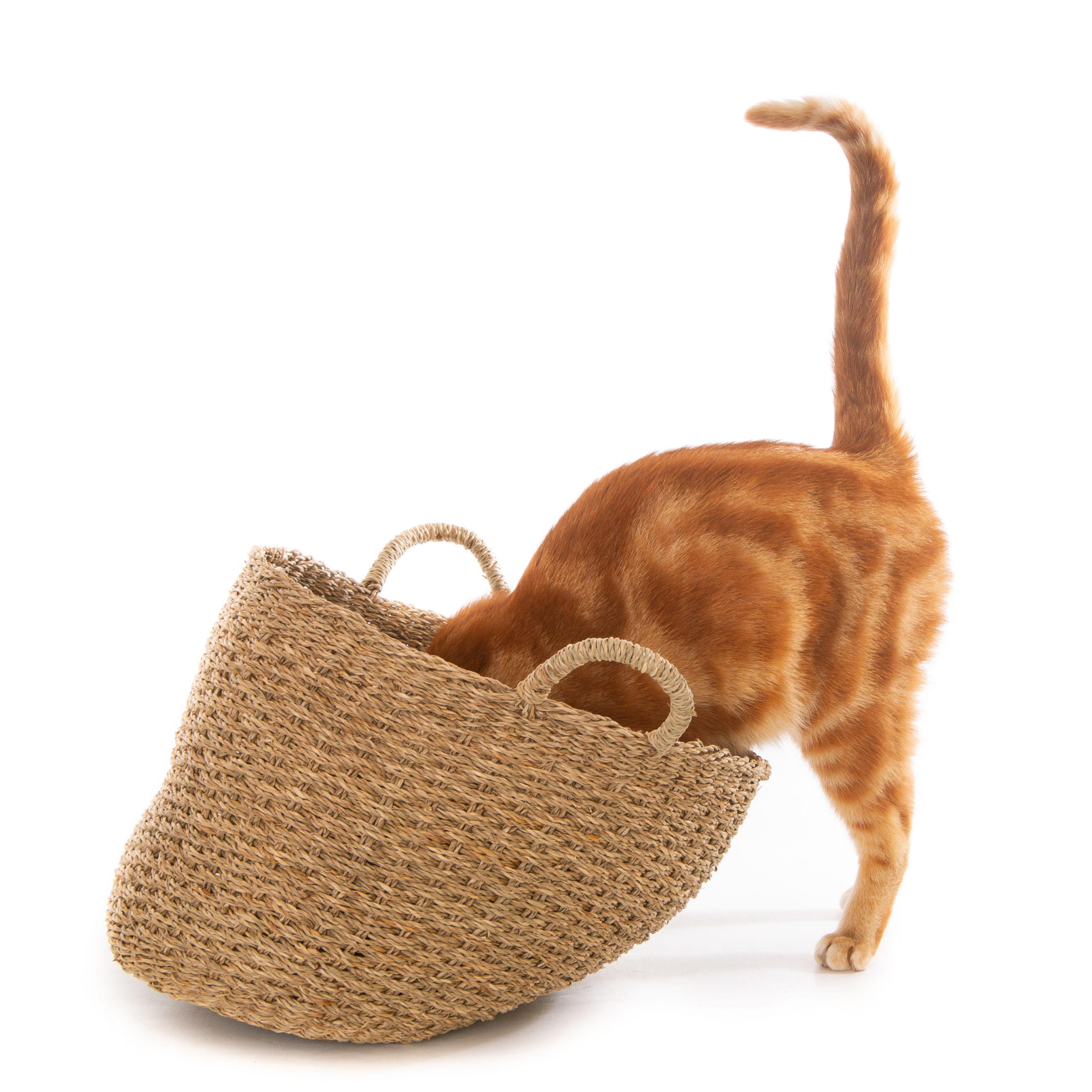 猫にしっぽがついている3つの意味とは?