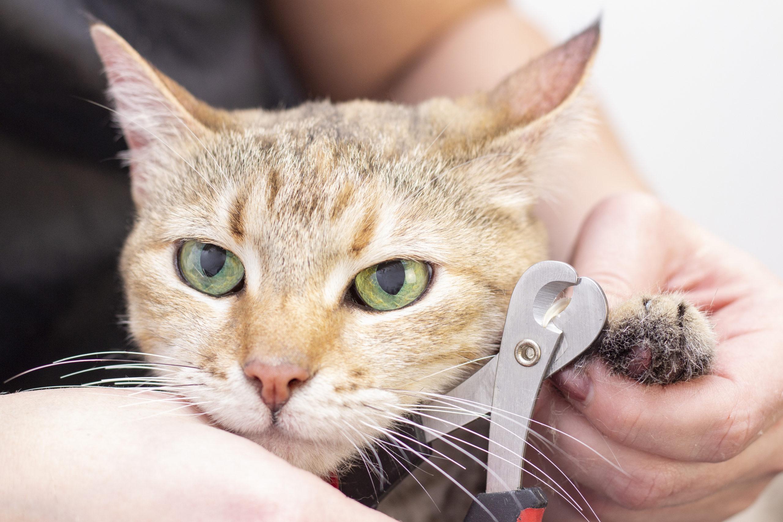 猫の爪切り動画集【猫の爪切りの仕方を動画で学びましょう】