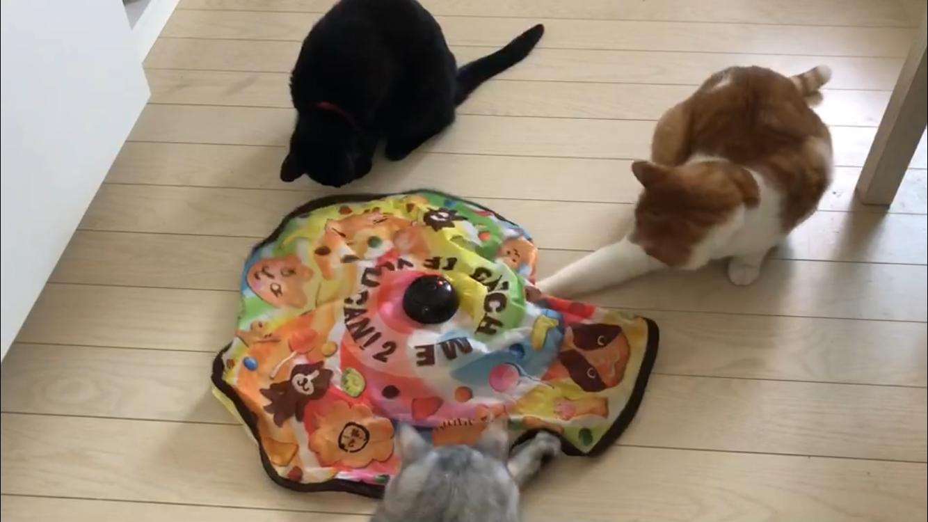 猫が好きなオススメなおもちゃ