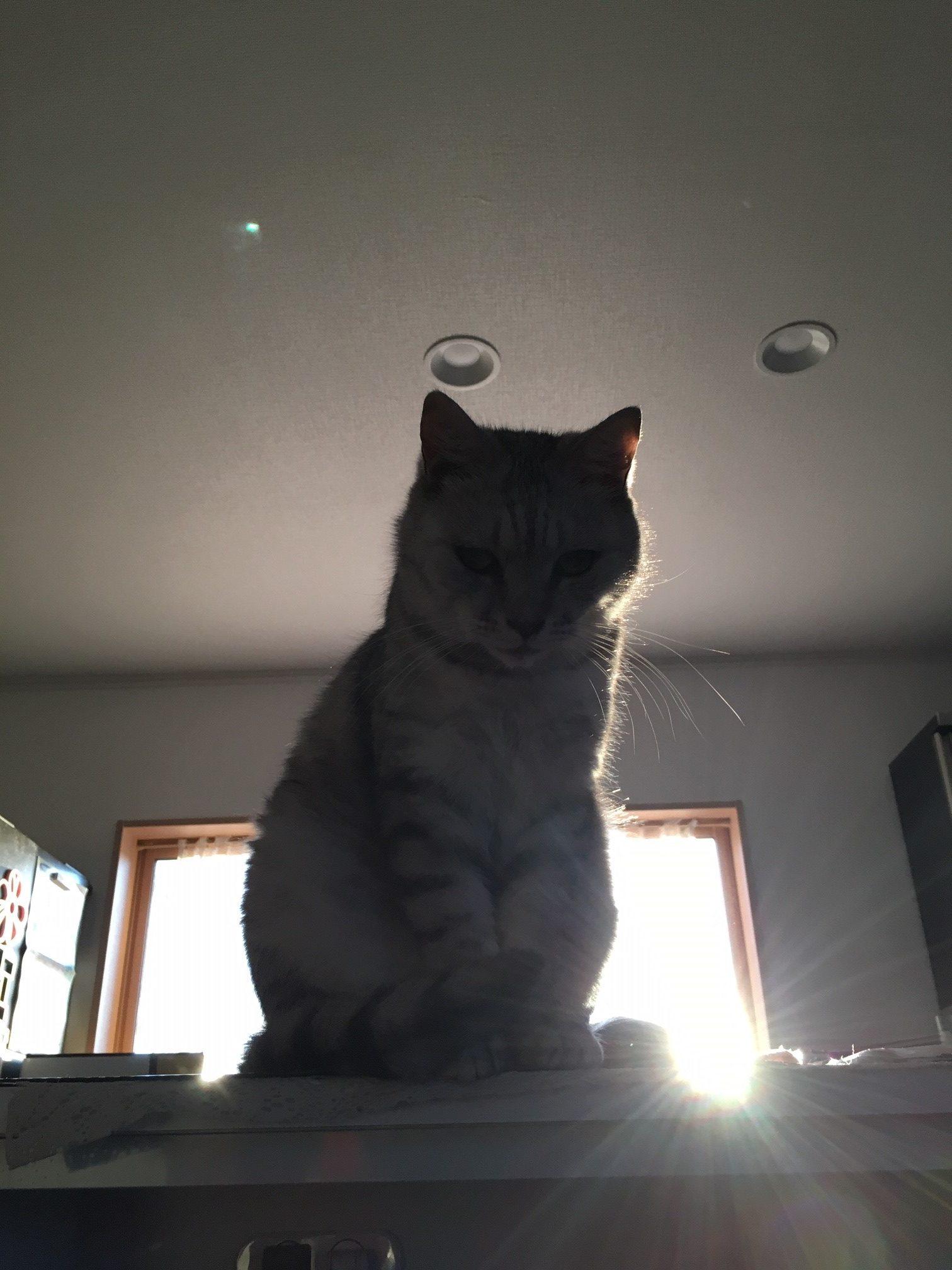我は猫神なるぞ