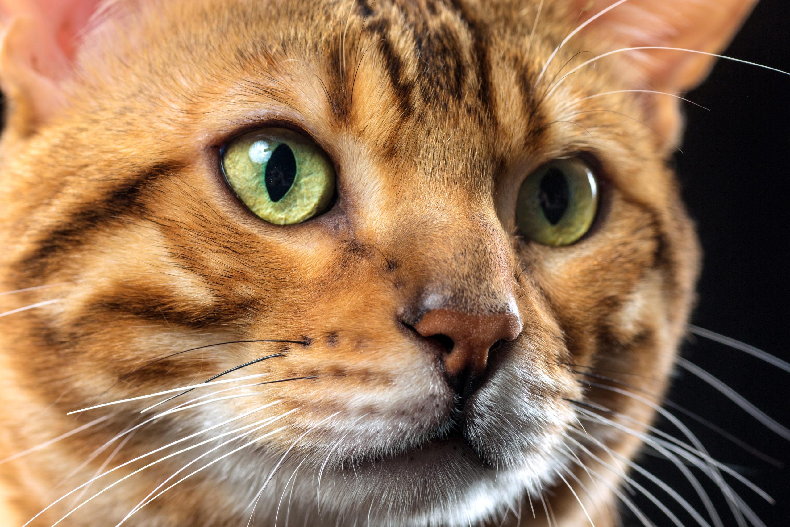 猫の耳垢が溜まってる?