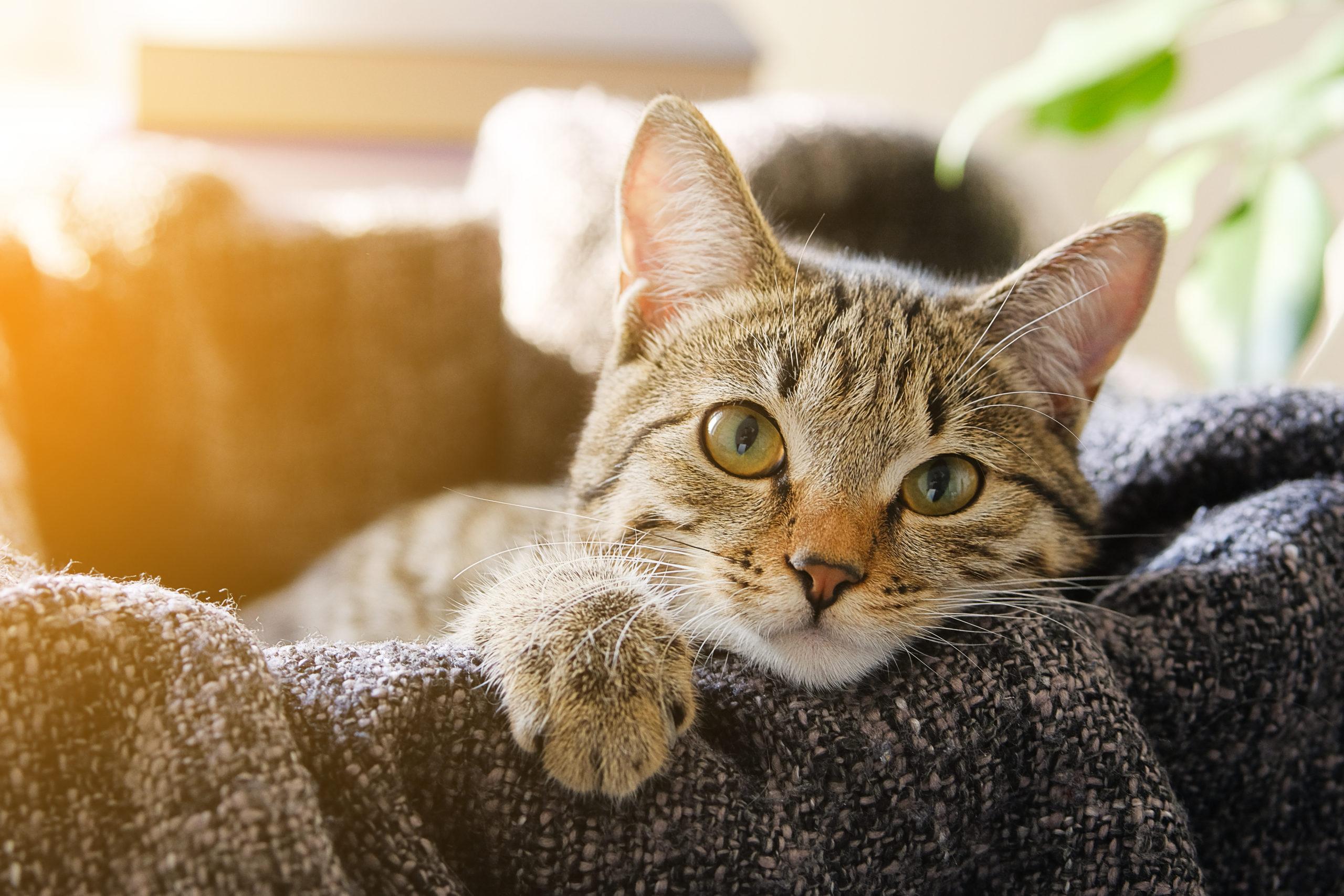 猫がトイレで寝ないようにする為の対策3つ