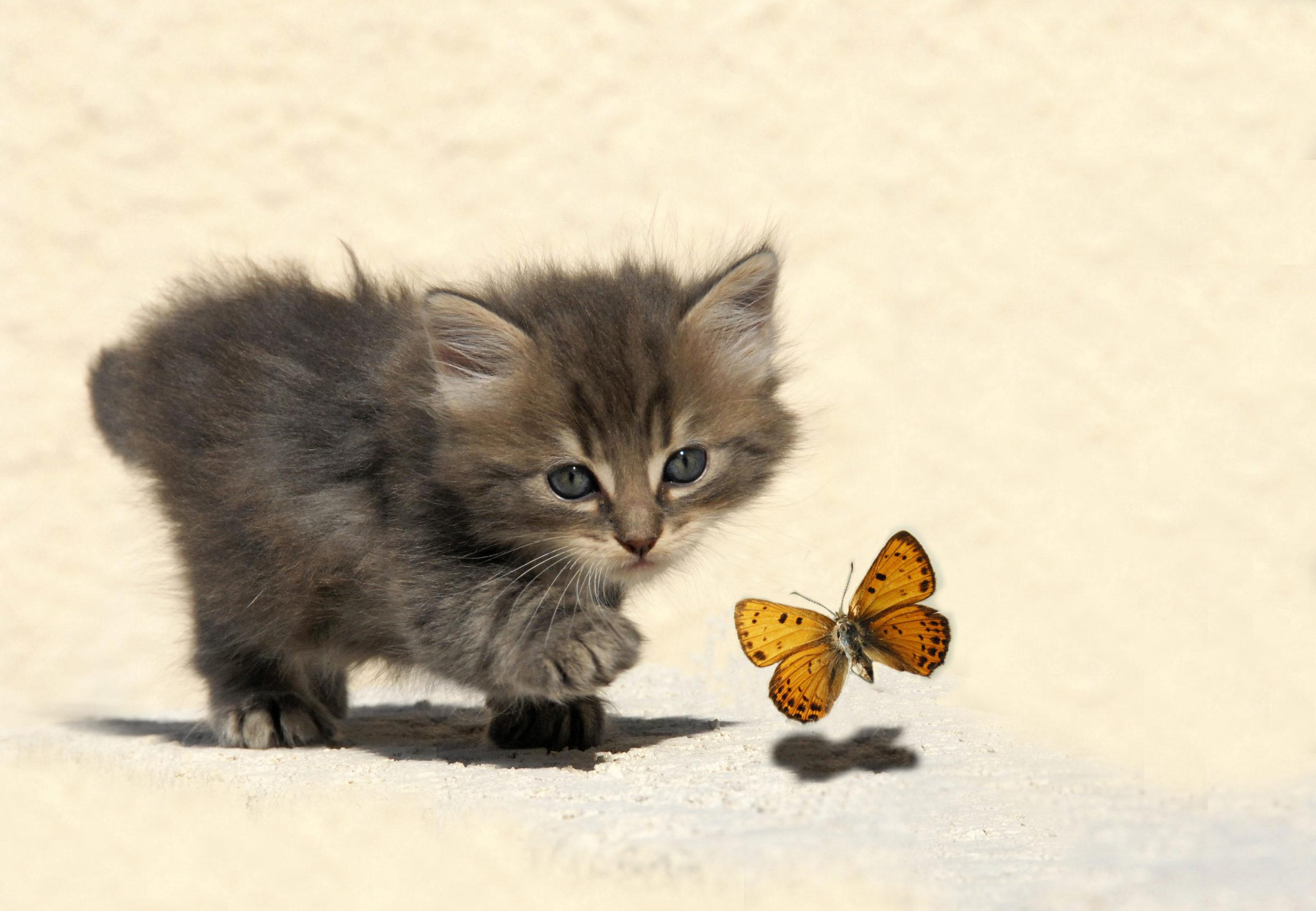 猫がトイレハイになる3つの理由