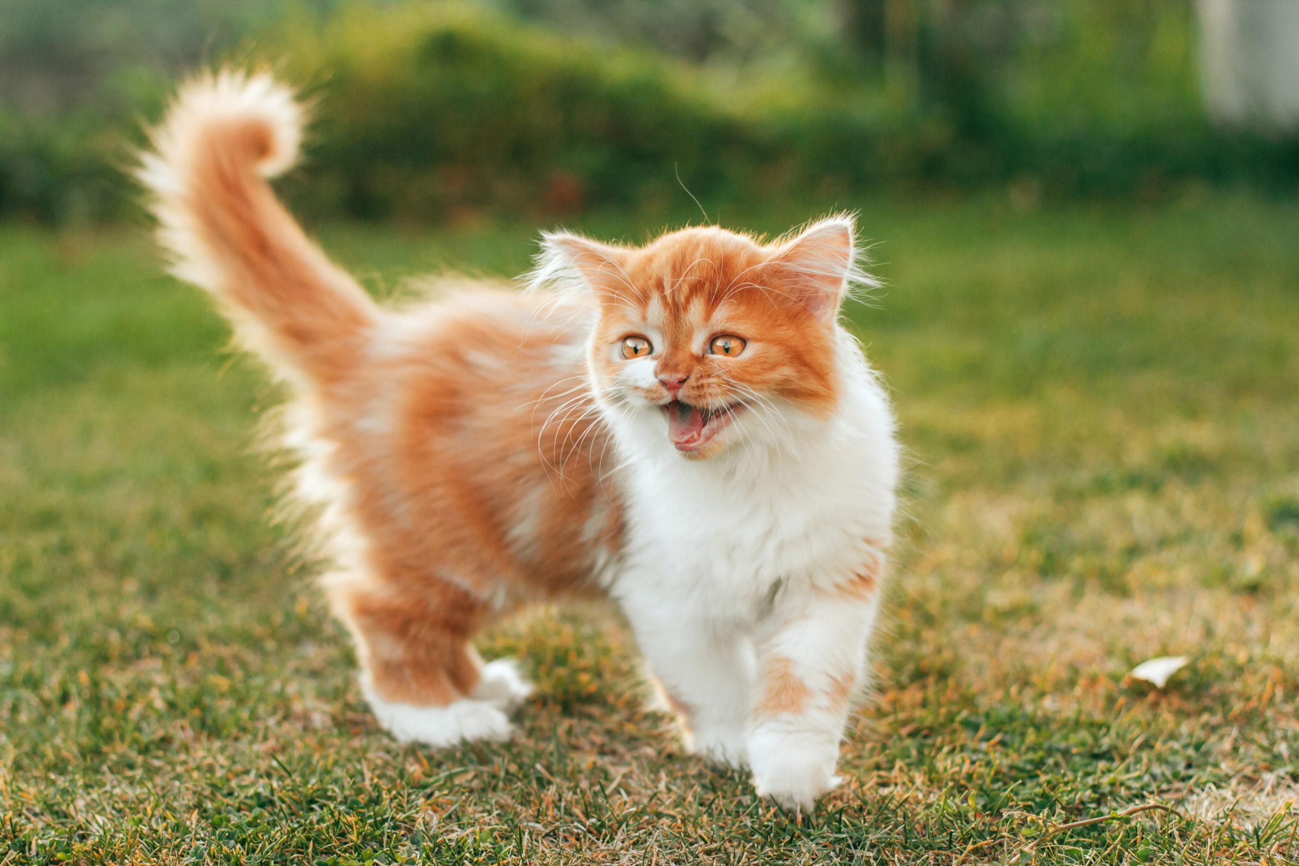 【必見】猫の鳴き声がうるさい時の4つの理由と5つの対策
