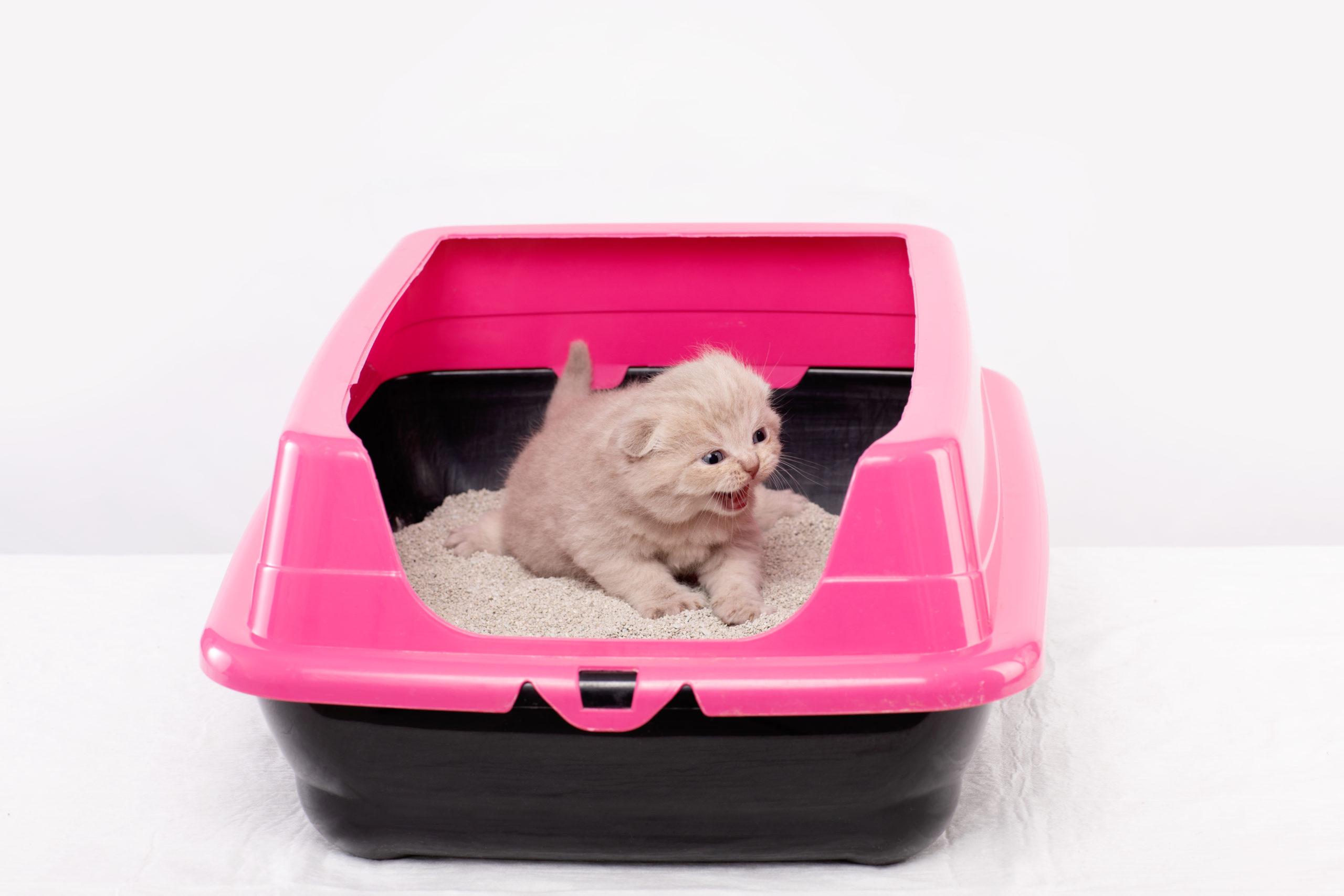 猫がトイレの時に鳴いている5つの理由【猫が鳴くなら早めの対策を】