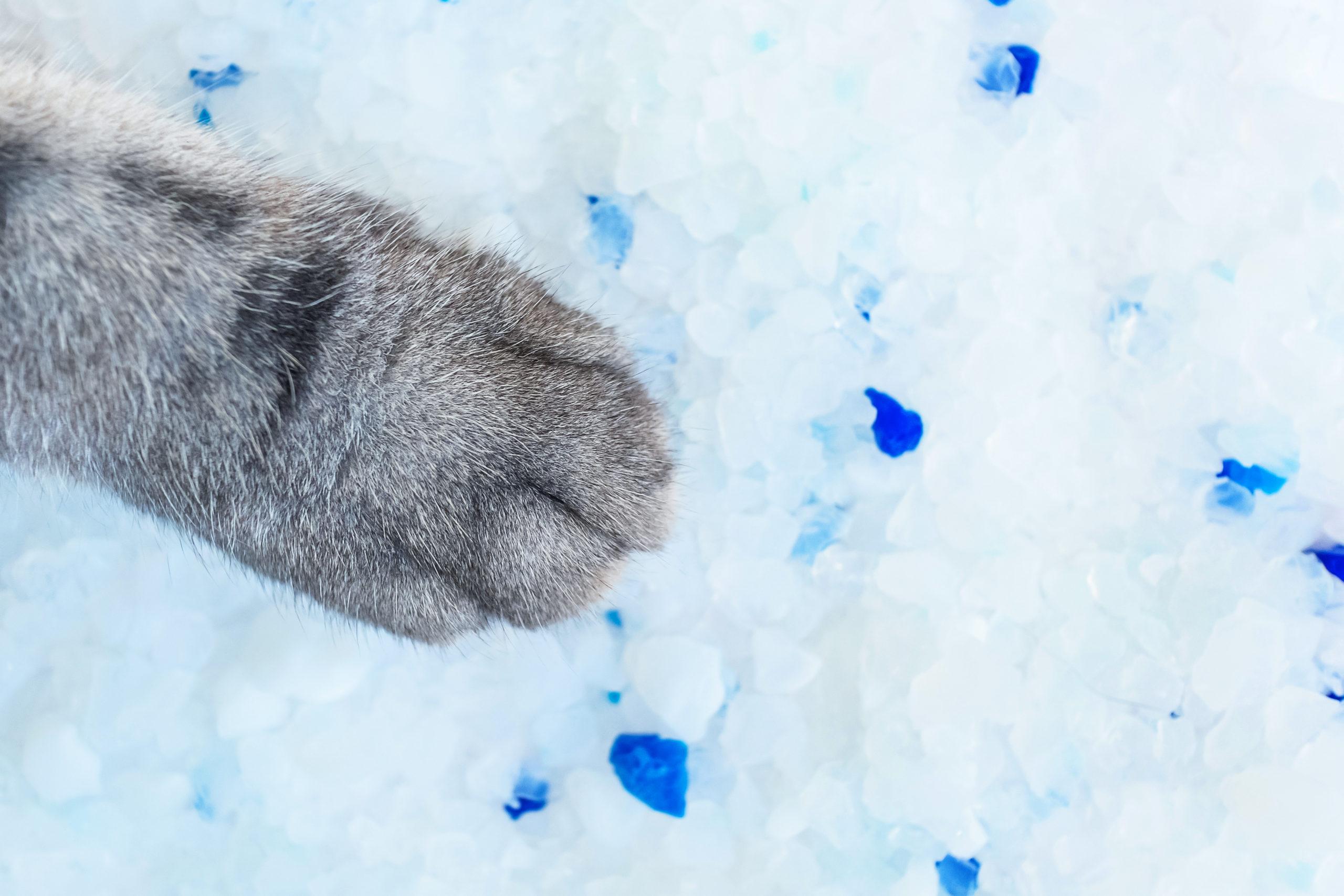 猫砂の種類