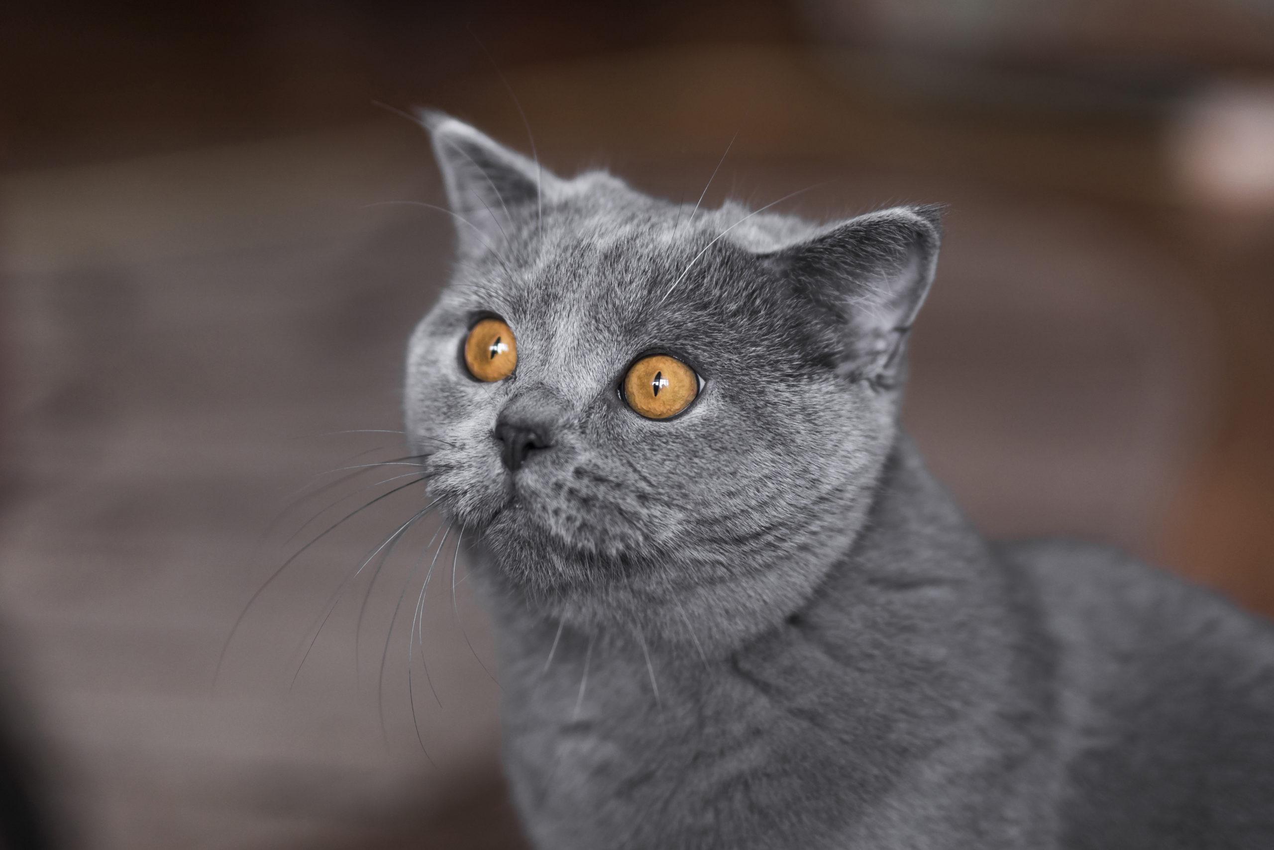 猫の感情は耳の角度で分かる?