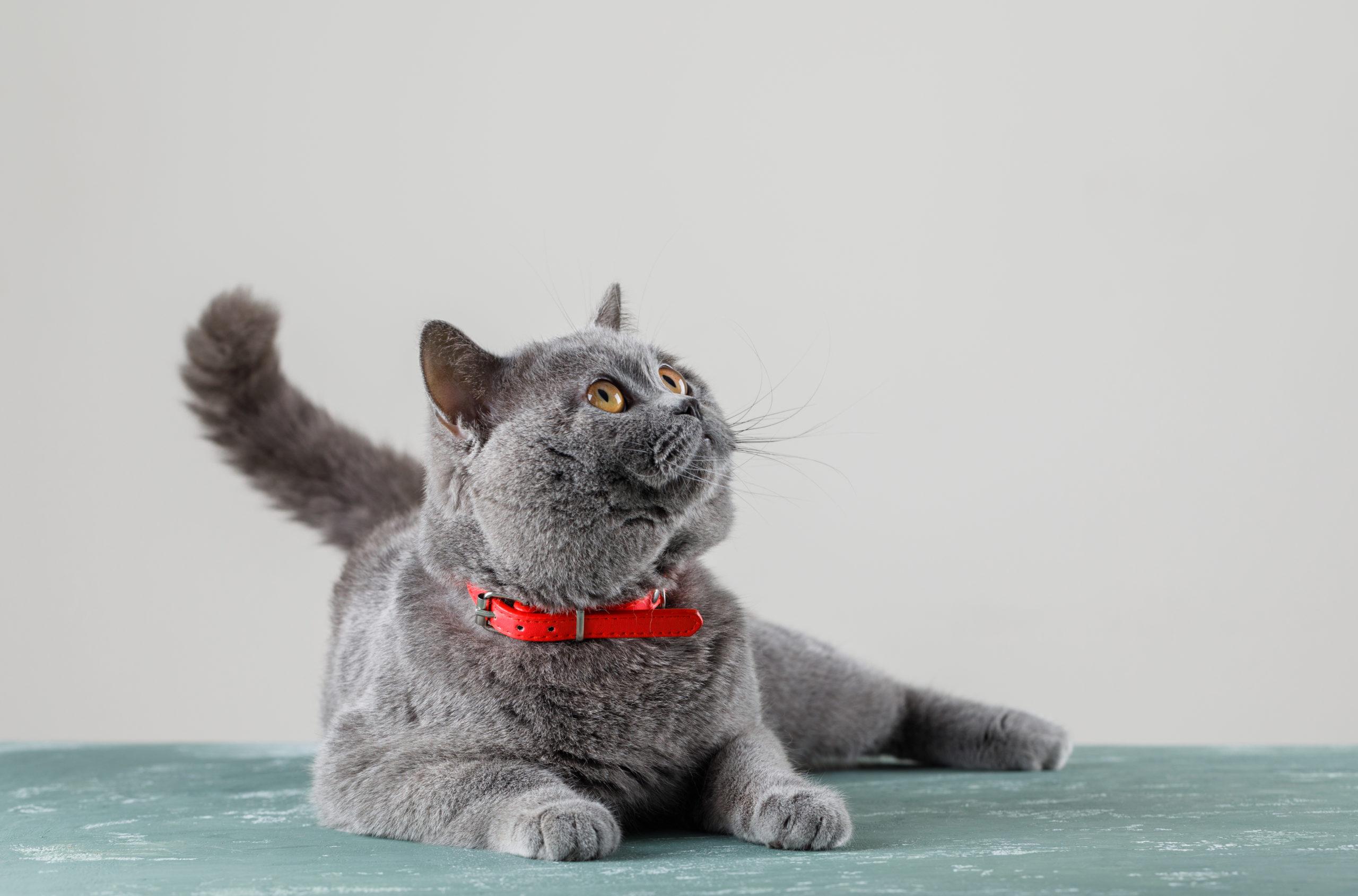 しっぽで分かる耳以外での猫の感情表現