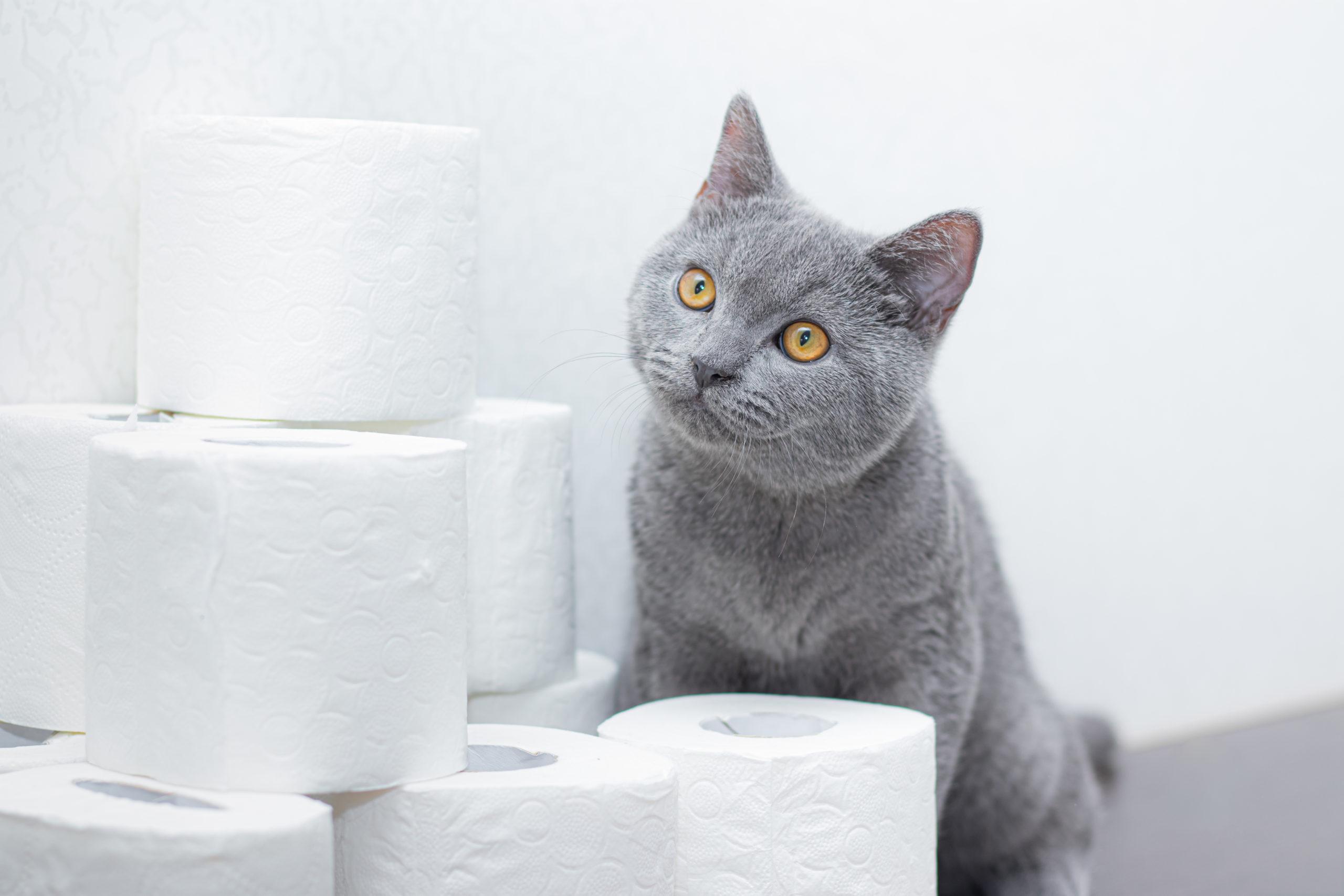 猫砂はどれが良いの?【猫砂の選び方とタイプ別の比較】