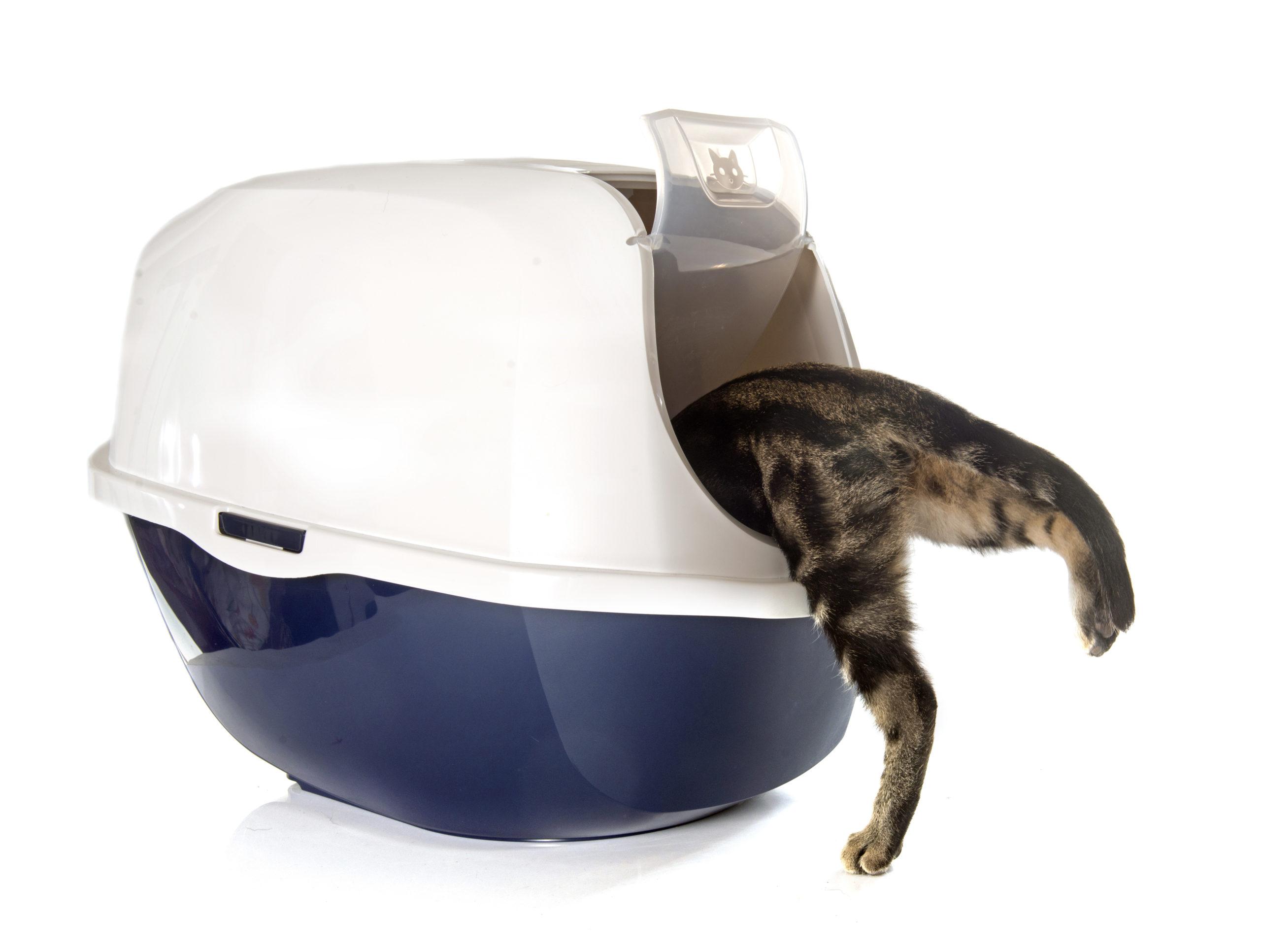 猫がトイレの時に鳴いている5つの理由